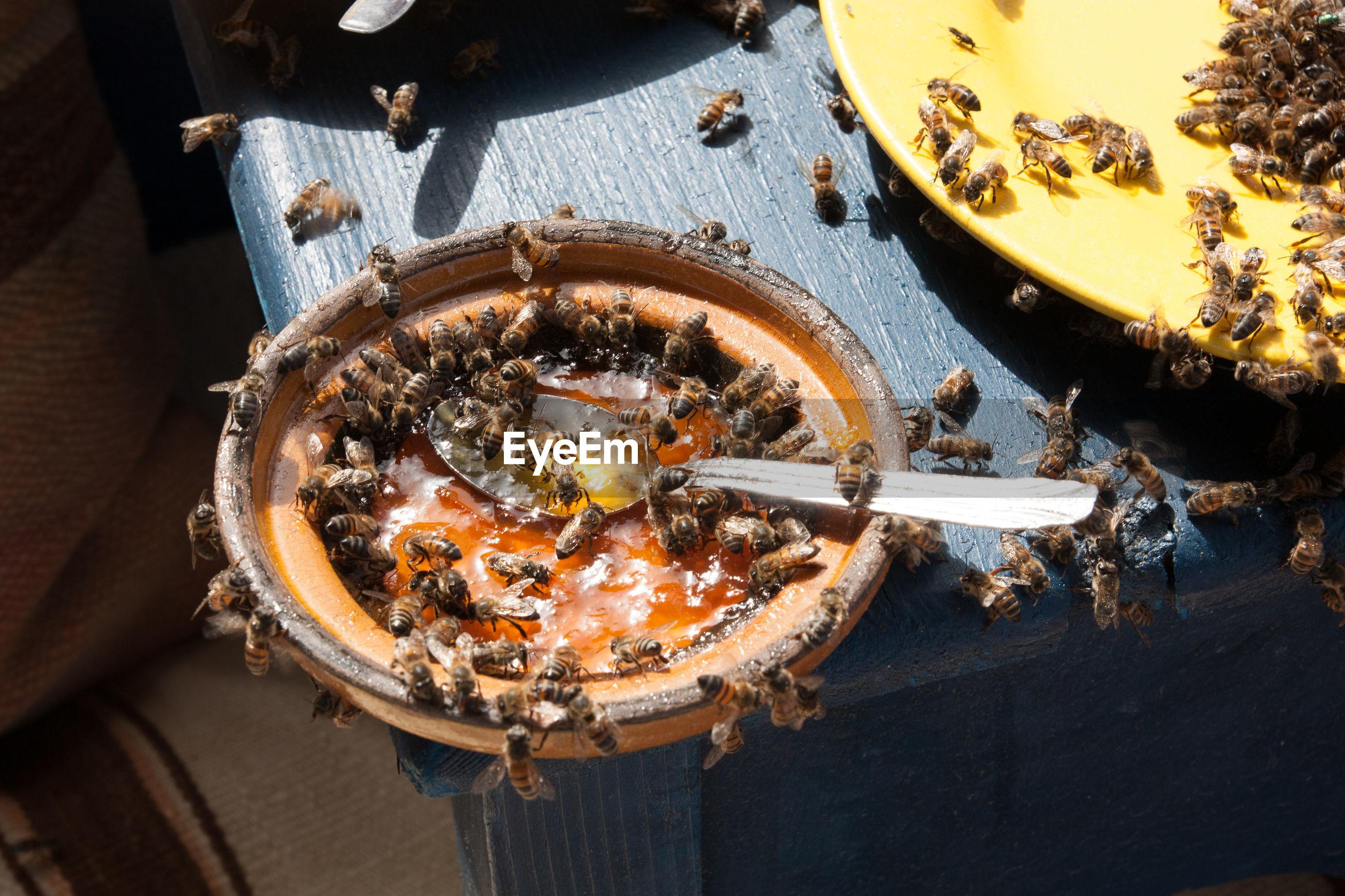 Honeybees in a bowl of honey