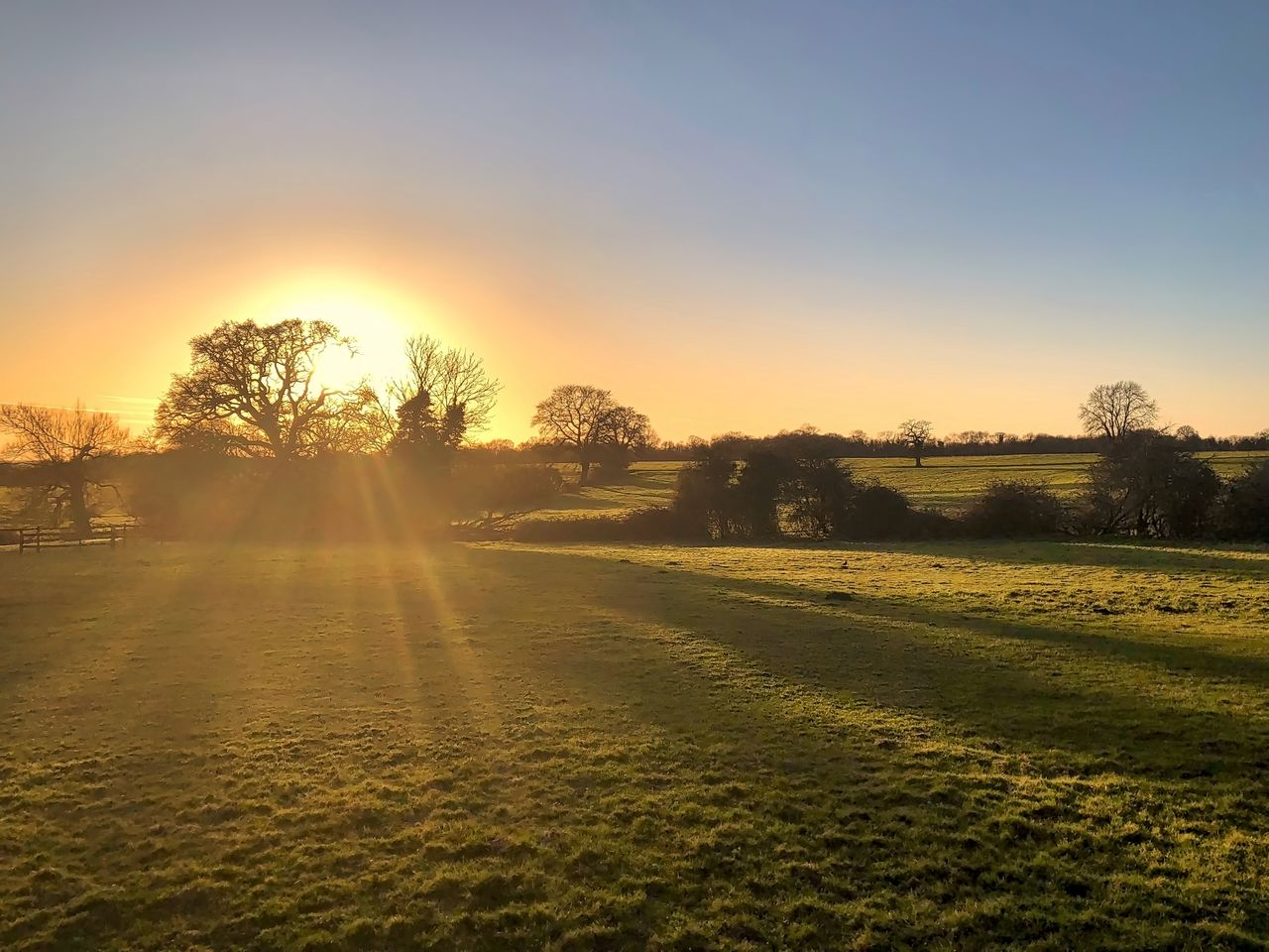 sunset, landscape, tree, beauty in nature, scenics, tranquil scene, nature, sunlight, tranquility, grass, no people, field, sun, outdoors, sky, rural scene, clear sky, day