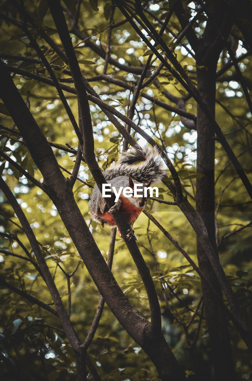 one animal, animal, tree, animal themes, animal wildlife, plant, animals in the wild, vertebrate, branch, nature, no people, focus on foreground, day, mammal, bird, outdoors, growth, low angle view, sunlight, rodent, animal head
