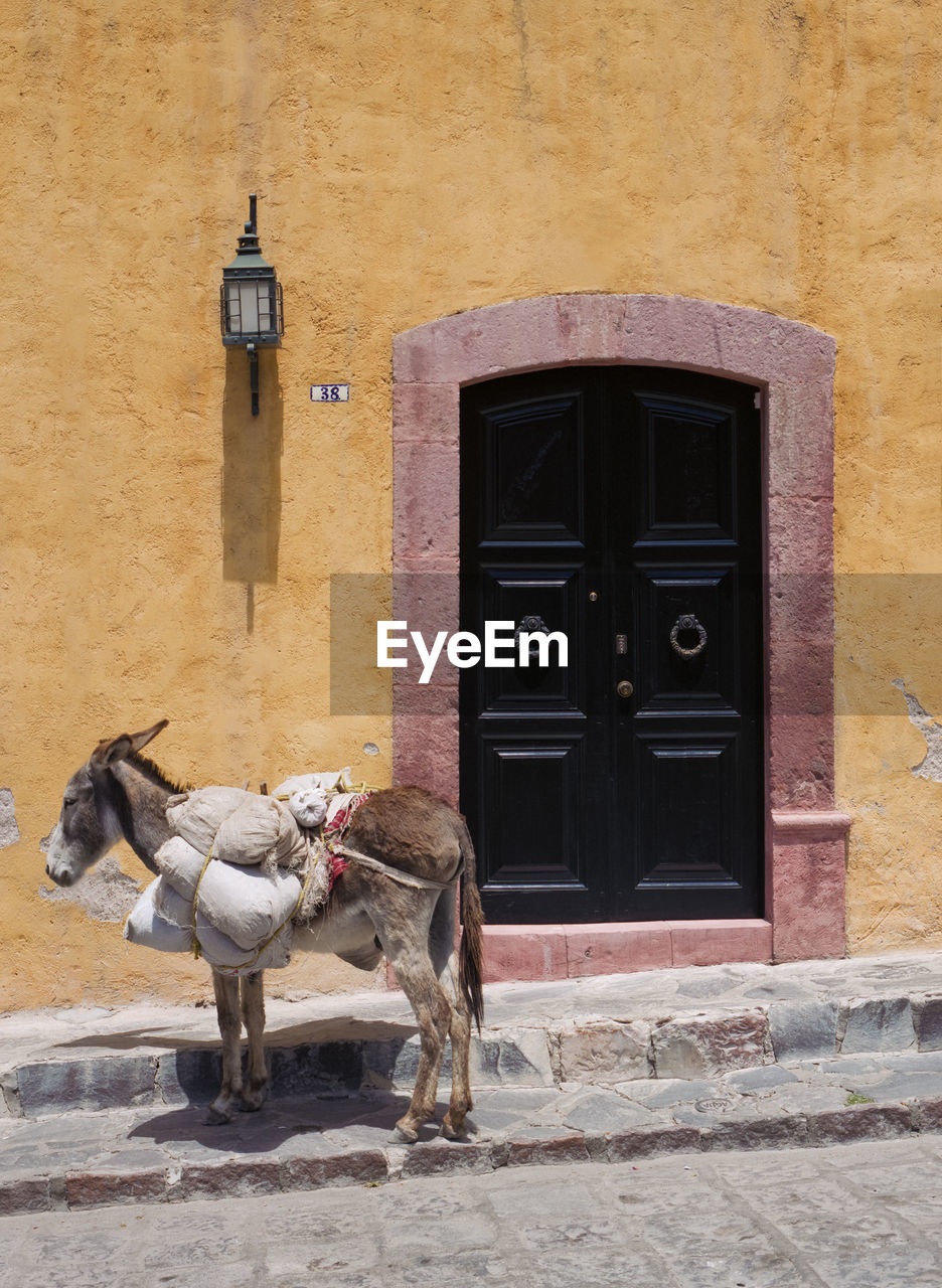 VIEW OF A HORSE IN BUILDING