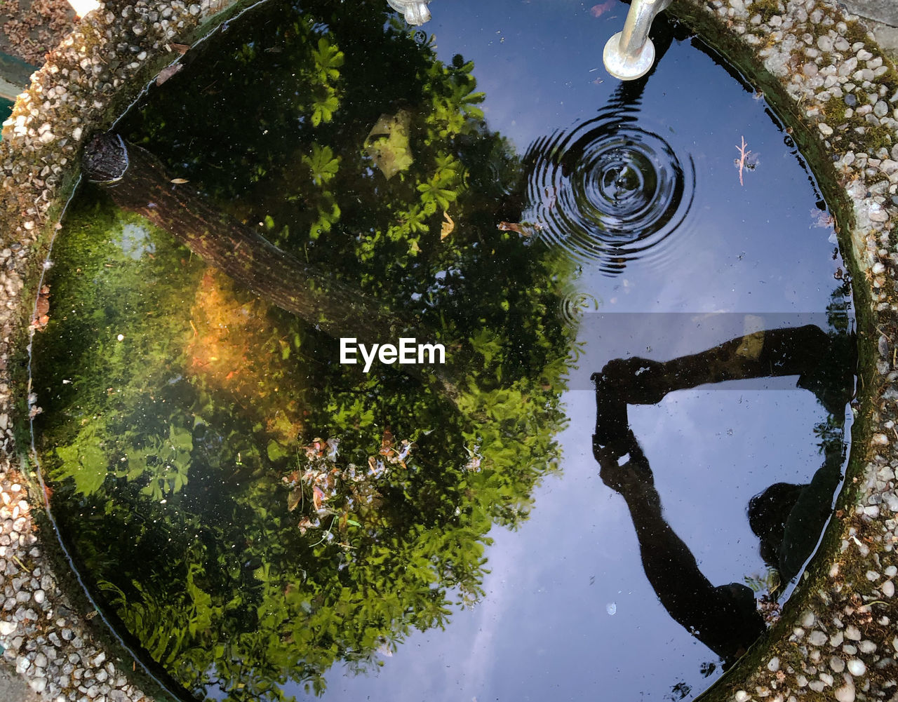 water, nature, reflection, plant, high angle view, no people, lake, tree, day, outdoors, directly above, standing water, circle, geometric shape, sky, waterfront, architecture, beauty in nature, space
