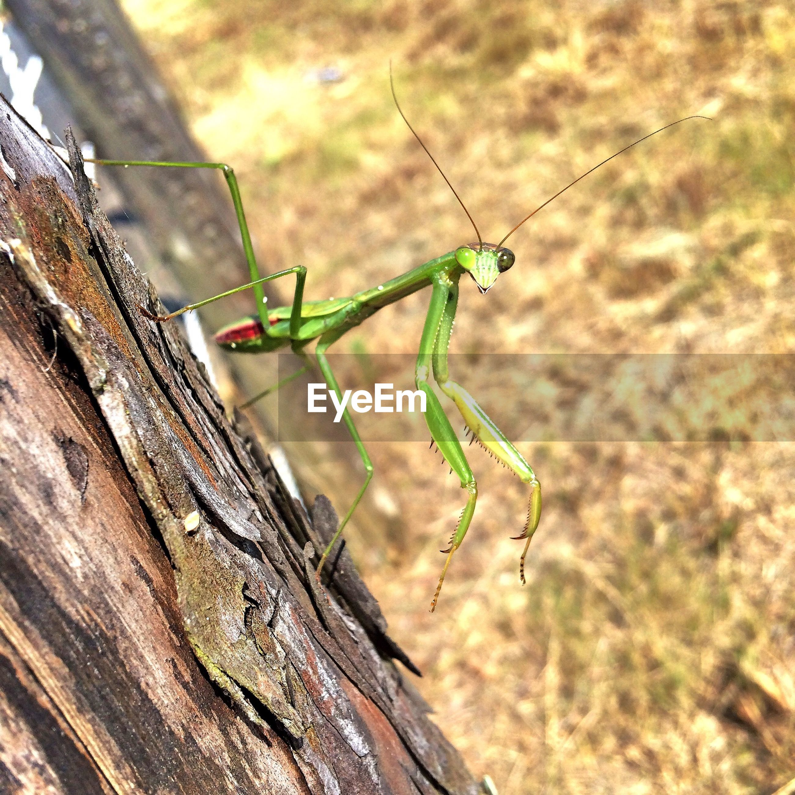 focus on foreground, close-up, wood - material, nature, selective focus, day, textured, insect, outdoors, tree trunk, plant, growth, twig, animals in the wild, rough, no people, natural pattern, wildlife, green color, beauty in nature