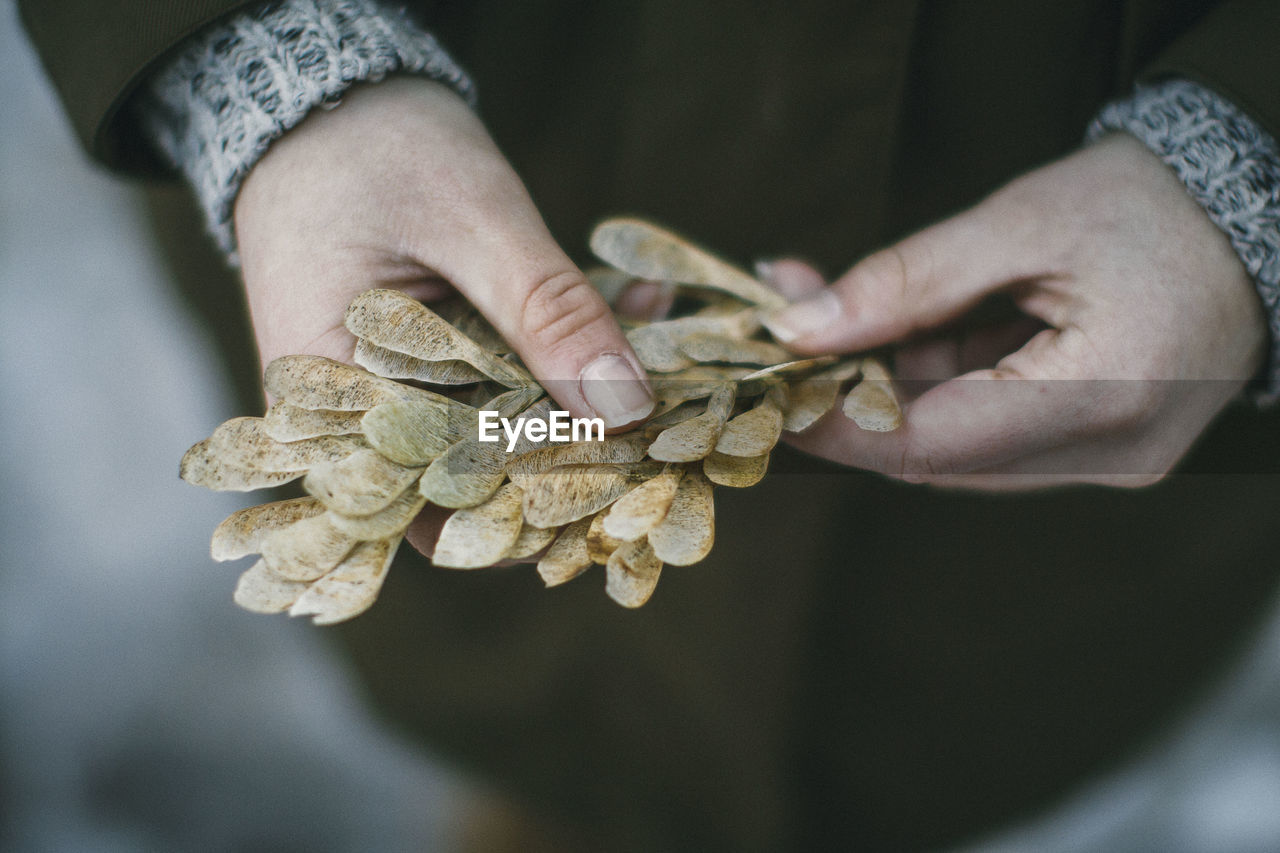 Close-up of hand holding leaves