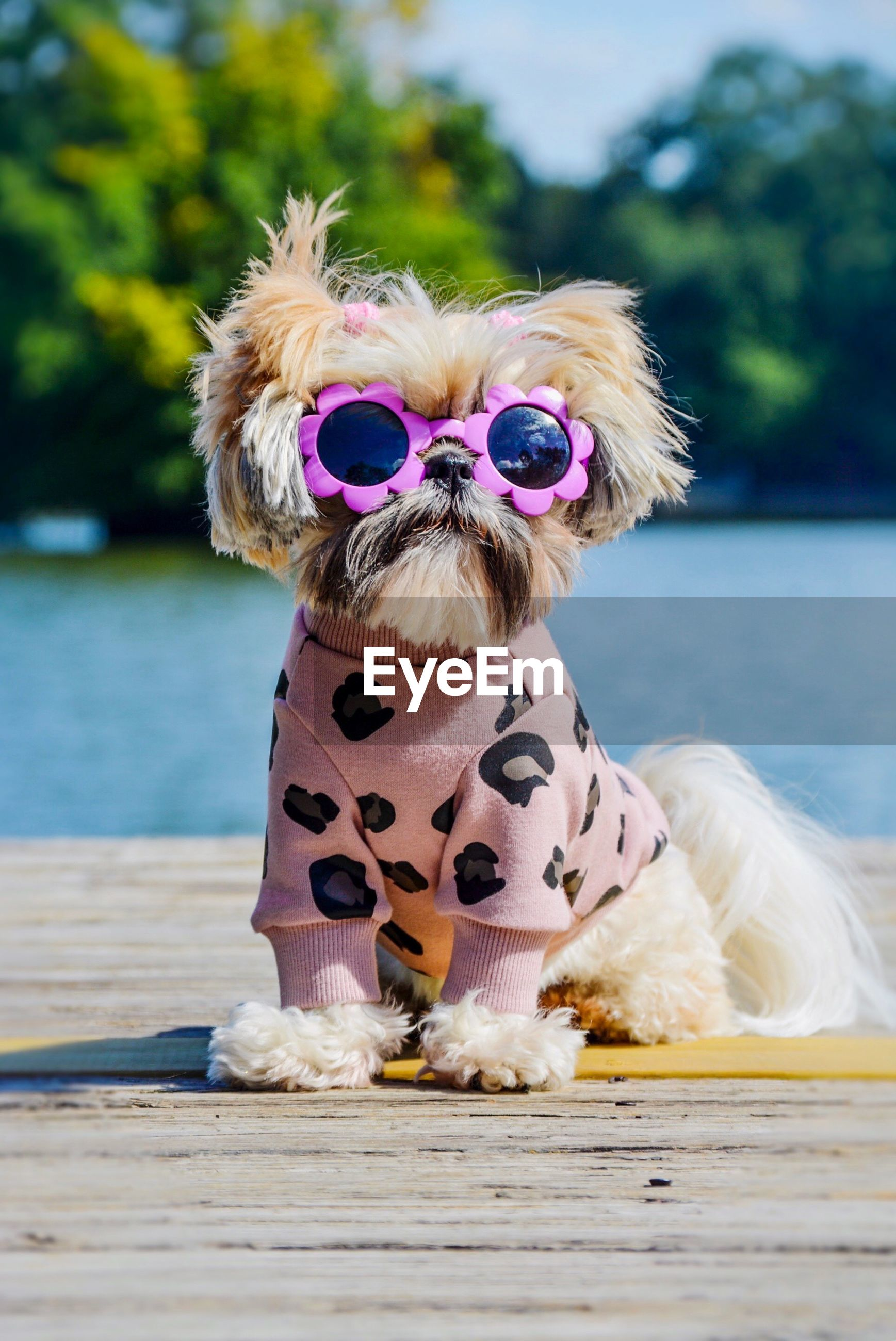 Portrait of dog in sunglasses sitting against lake