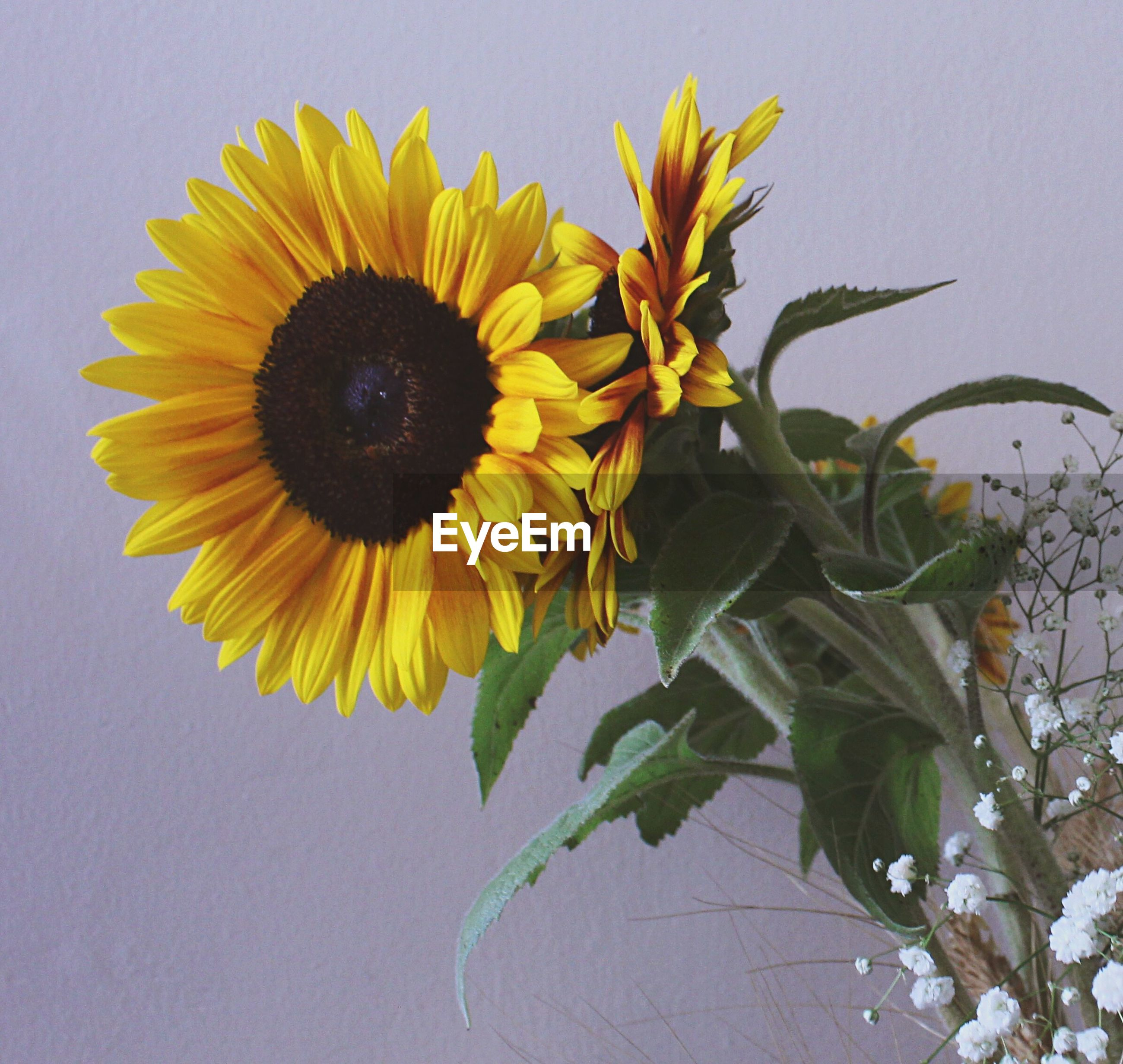 yellow, flower, sunflower, freshness, fragility, petal, flower head, growth, plant, leaf, beauty in nature, nature, stem, close-up, blooming, clear sky, in bloom, pollen, low angle view, wall - building feature
