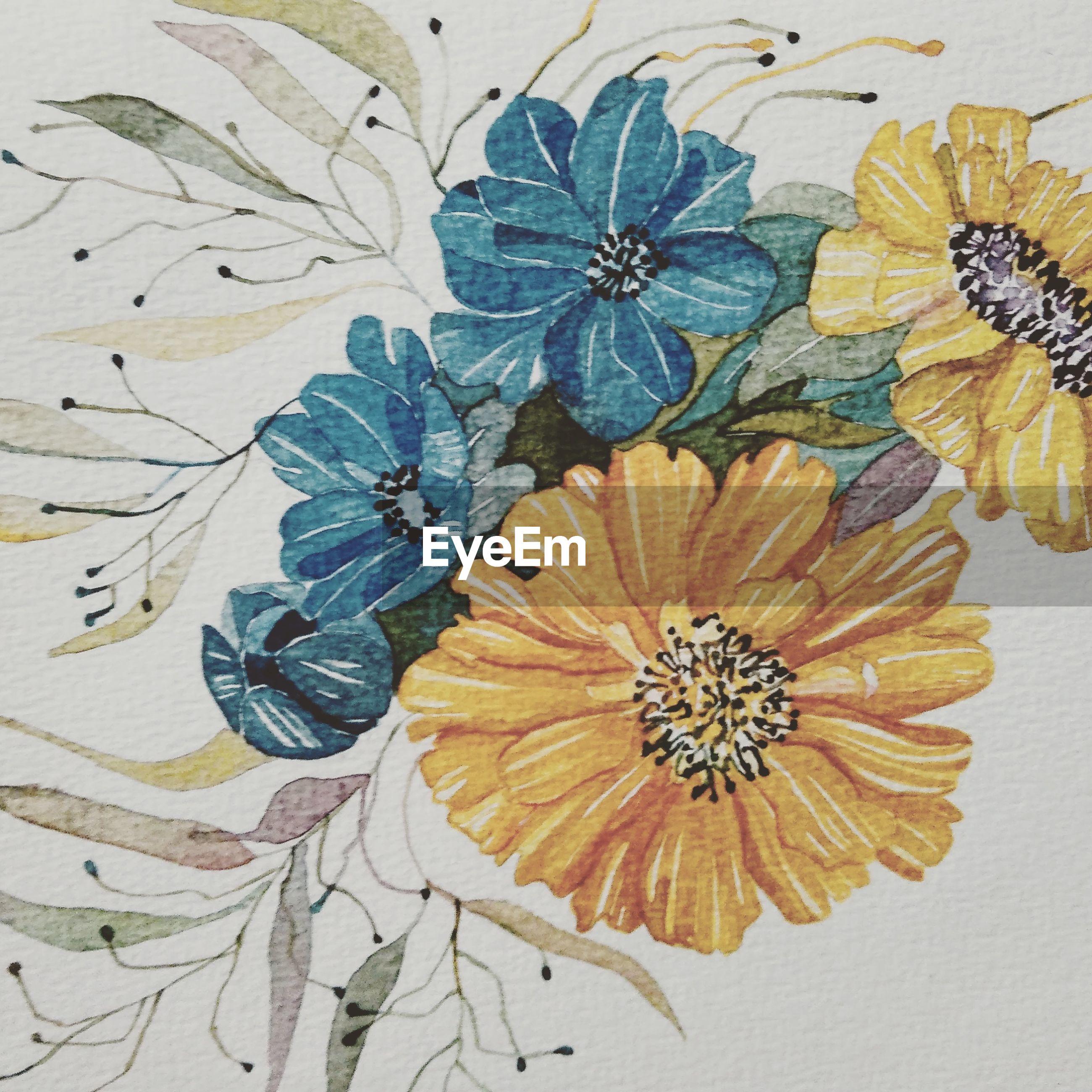 flower, close-up, freshness, flower head, petal, design, creativity, fragility, flower arrangement, springtime, vibrant color, single flower, pollen, blossom, full frame