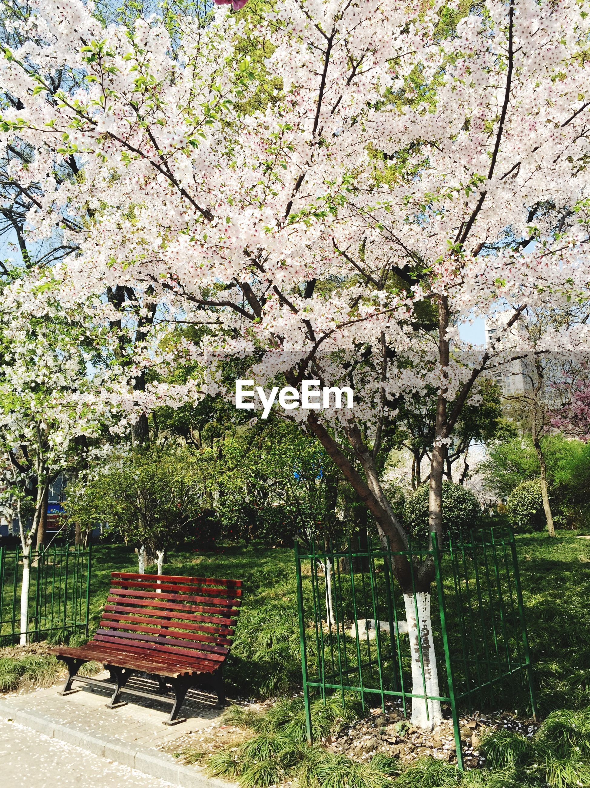 tree, growth, branch, flower, park - man made space, nature, bench, beauty in nature, tranquility, blossom, tranquil scene, green color, park, tree trunk, freshness, built structure, day, plant, grass, park bench
