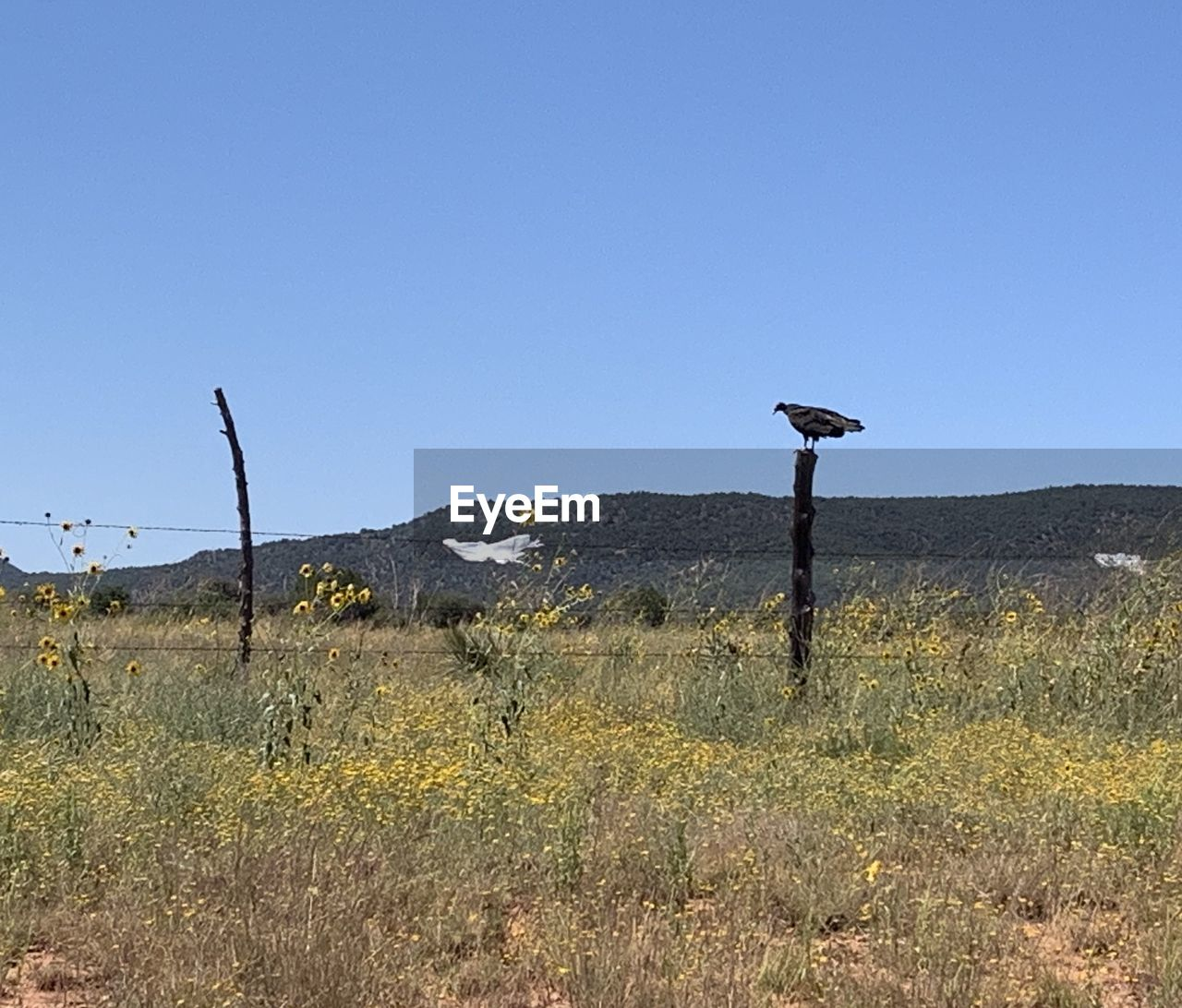 WOODEN POSTS ON FIELD AGAINST CLEAR SKY
