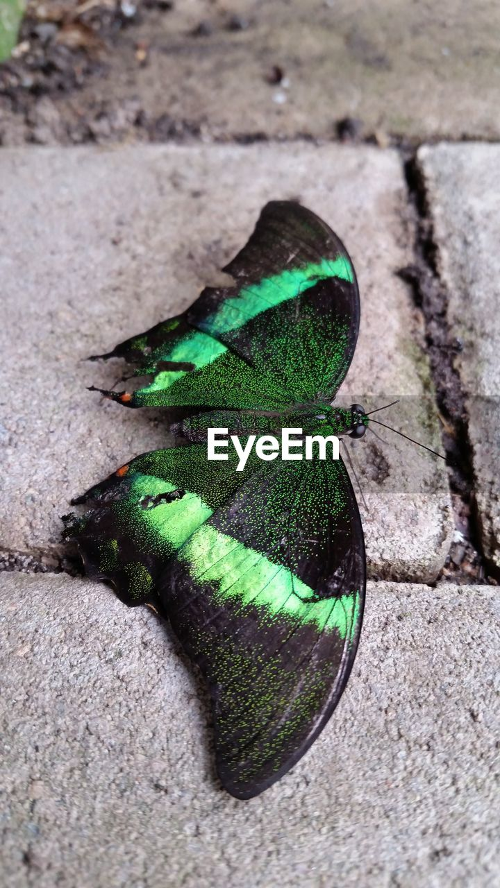 insect, one animal, green color, animals in the wild, animal themes, day, outdoors, no people, nature, high angle view, close-up, leaf
