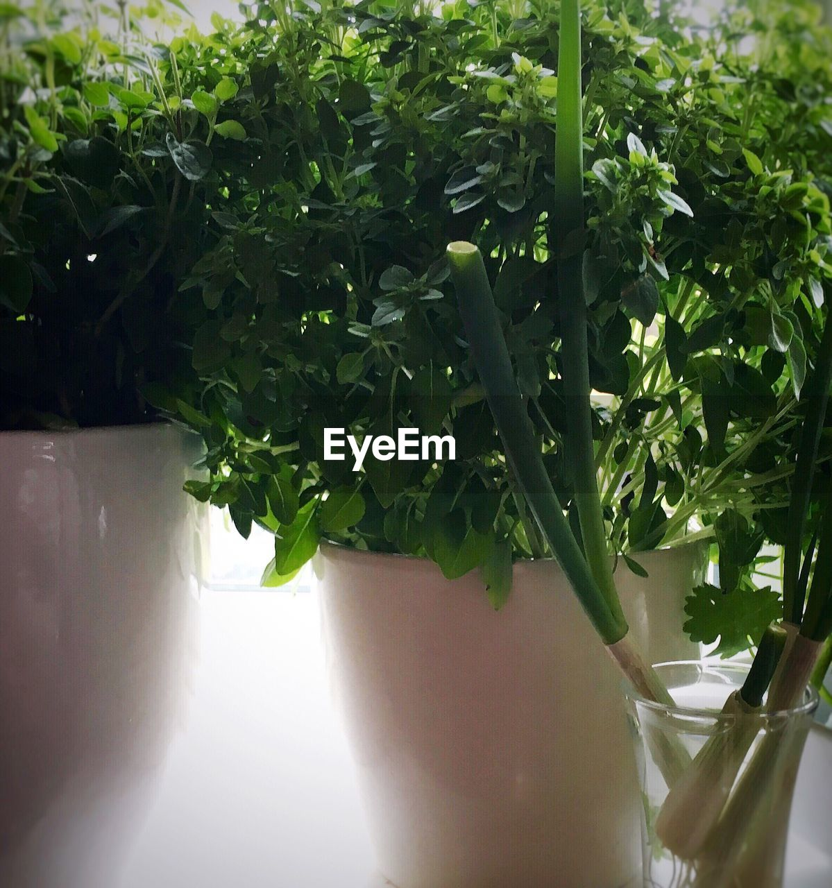 plant, green color, potted plant, food and drink, growth, food, freshness, day, no people, outdoors, close-up, healthy eating, nature