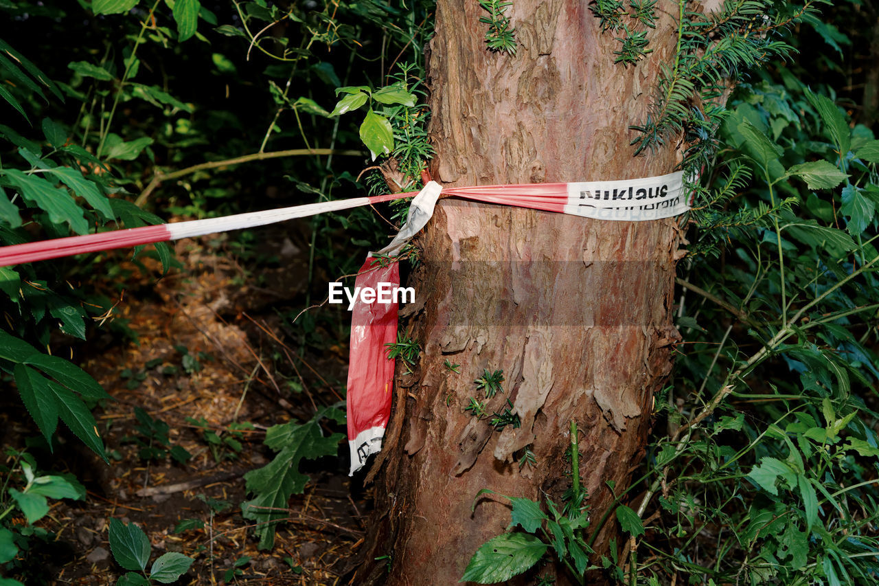 plant, growth, no people, nature, day, communication, plant part, green color, leaf, close-up, land, sign, hanging, text, tree, outdoors, tied up, wood - material, forest, rope