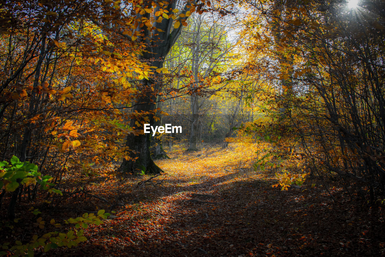 autumn, tree, forest, land, change, plant, tranquility, woodland, nature, leaf, plant part, beauty in nature, tranquil scene, non-urban scene, no people, the way forward, scenics - nature, orange color, dirt road, direction, outdoors, trail, autumn collection