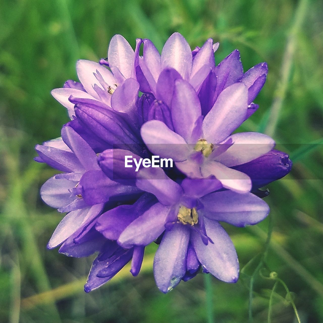 flower, beauty in nature, nature, petal, purple, fragility, growth, no people, plant, freshness, flower head, close-up, outdoors, day