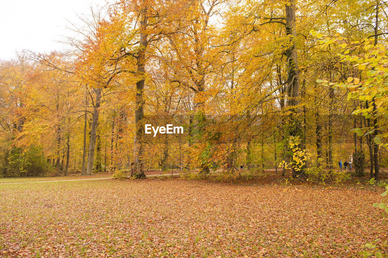 View of autumnal trees in the forest