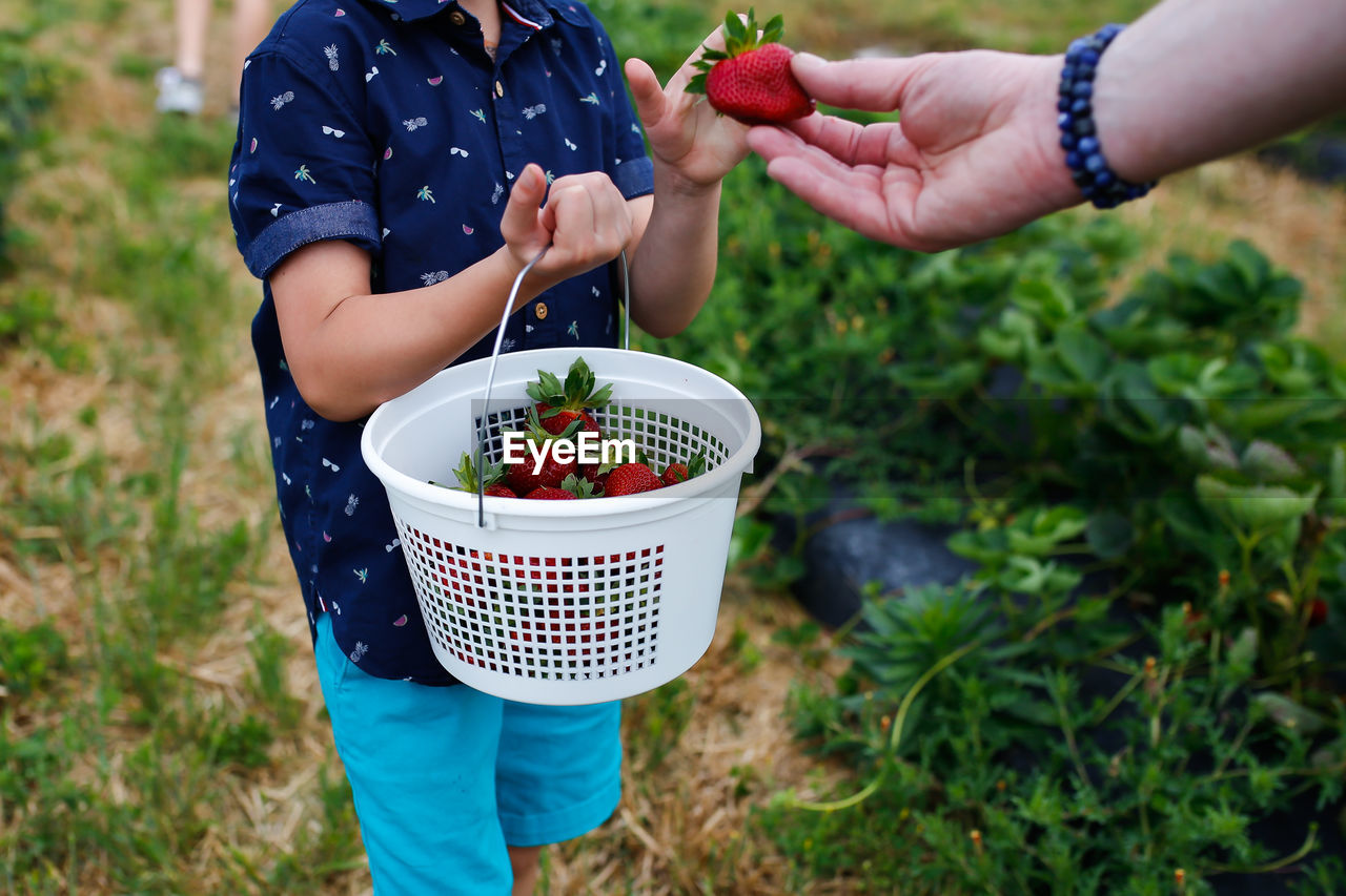 Midsection of boy receiving strawberry from man at farm