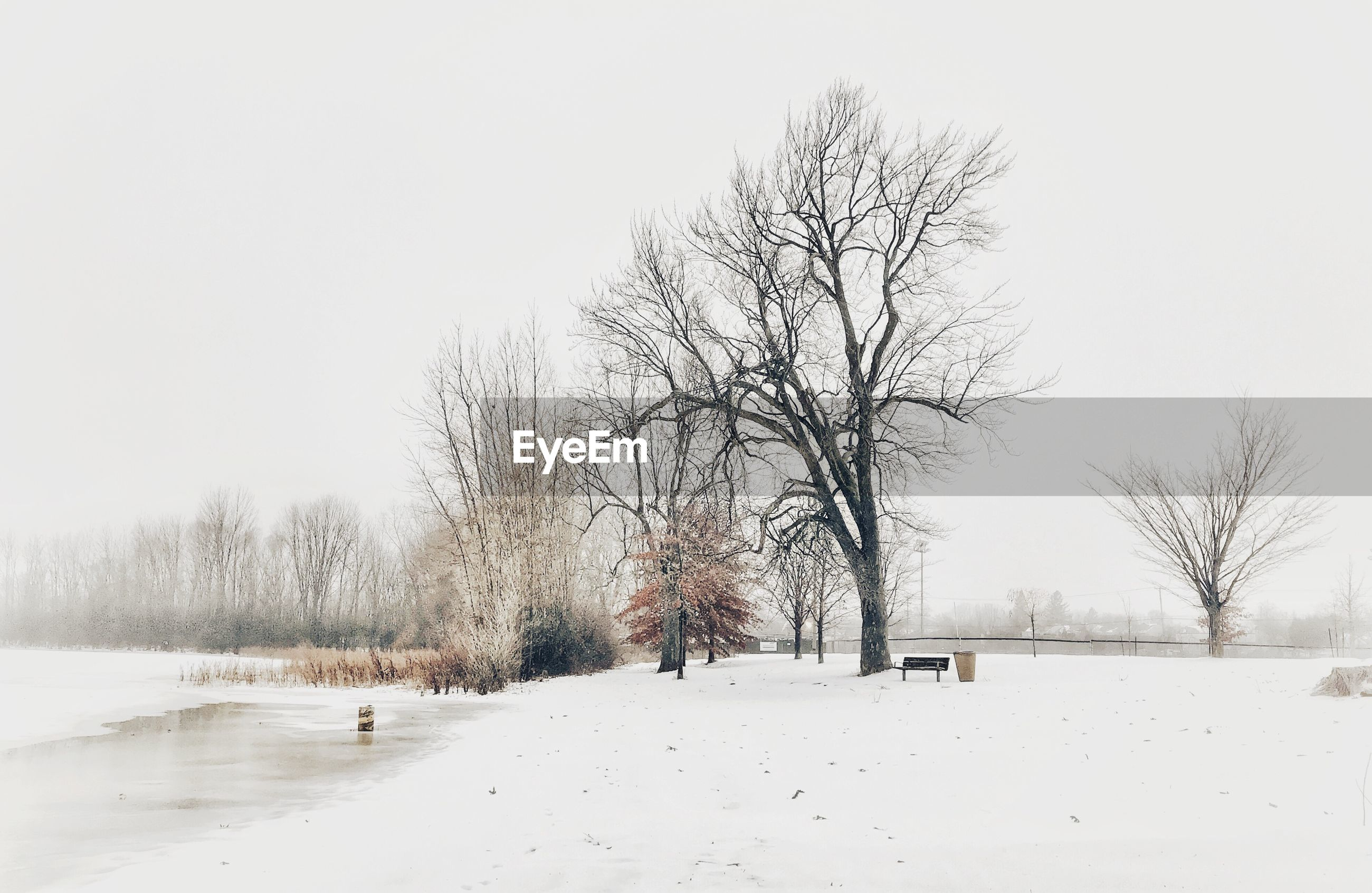 BARE TREES ON SNOW FIELD AGAINST CLEAR SKY