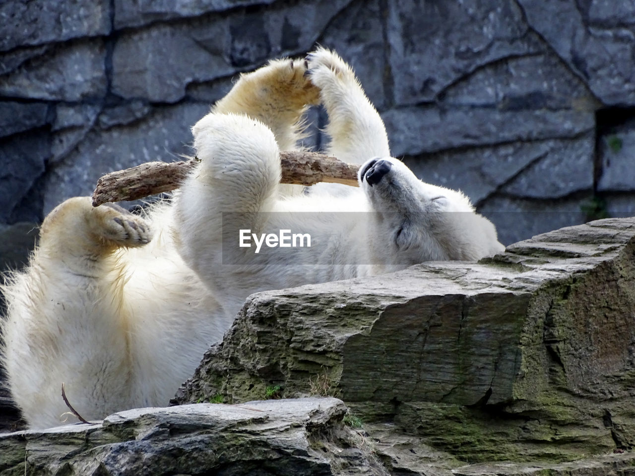 animal, animal themes, group of animals, animal wildlife, animals in the wild, mammal, vertebrate, solid, rock, rock - object, no people, polar bear, two animals, day, bear, nature, zoo, sitting, focus on foreground, primate, animal family