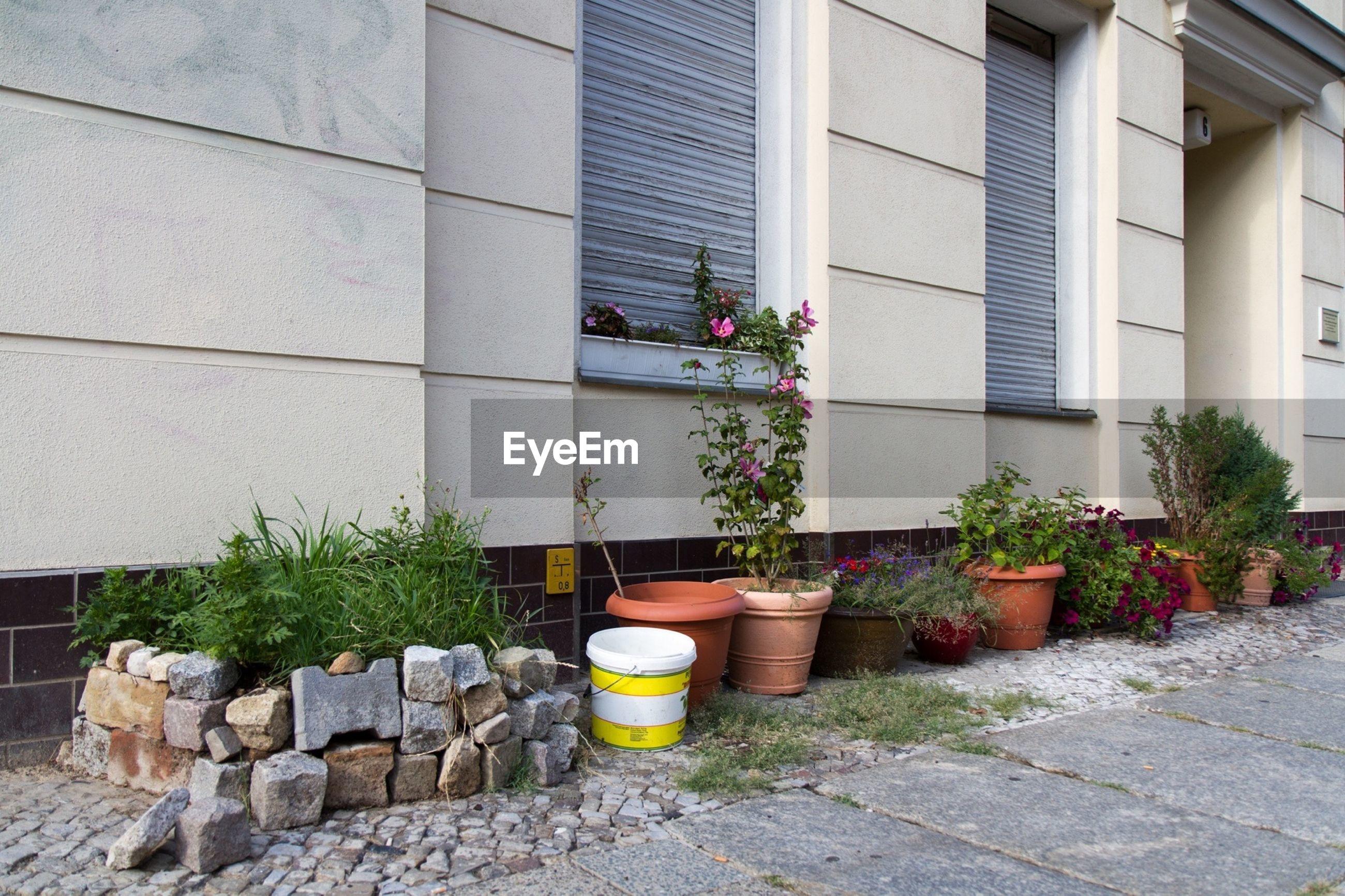 Row of potted plants on sidewalk