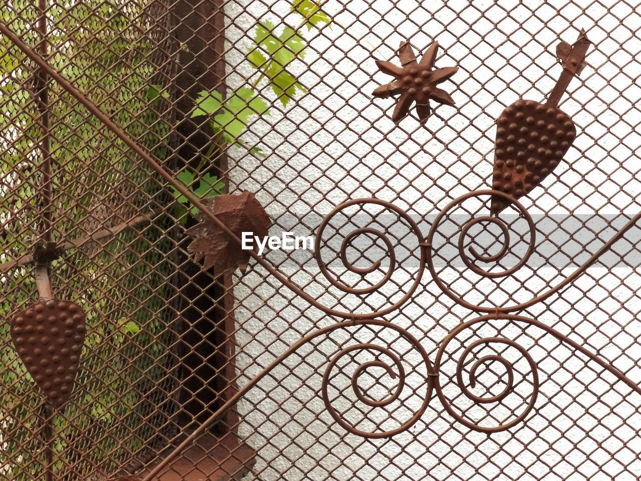 fence, barrier, boundary, no people, chainlink fence, security, protection, metal, animal wildlife, close-up, day, animal, brown, safety, animal themes, nature, one animal, pattern, outdoors, animals in the wild