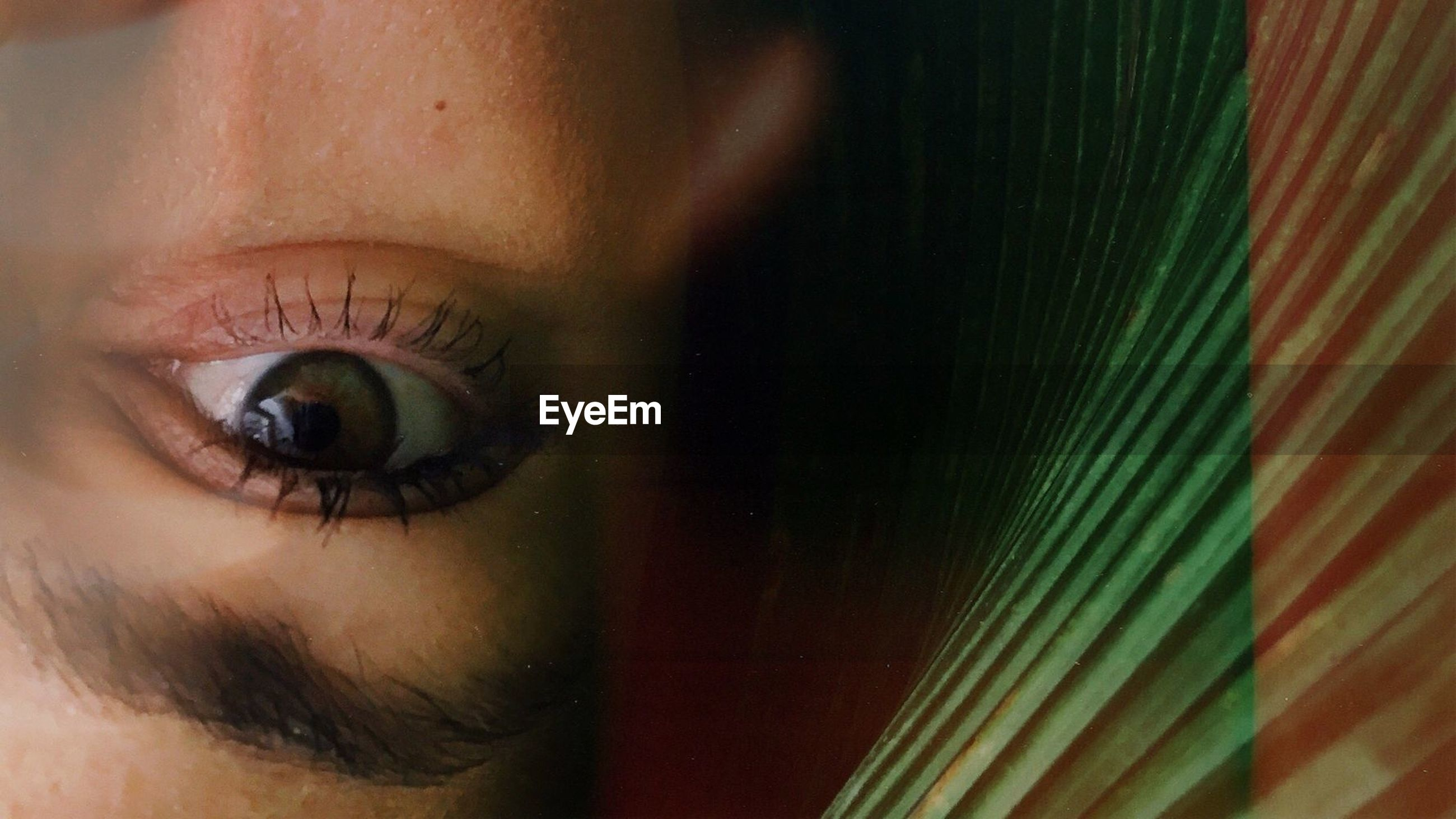 human eye, one person, eyelash, close-up, sensory perception, human body part, looking at camera, real people, eyeball, eyesight, young adult, indoors, day, people
