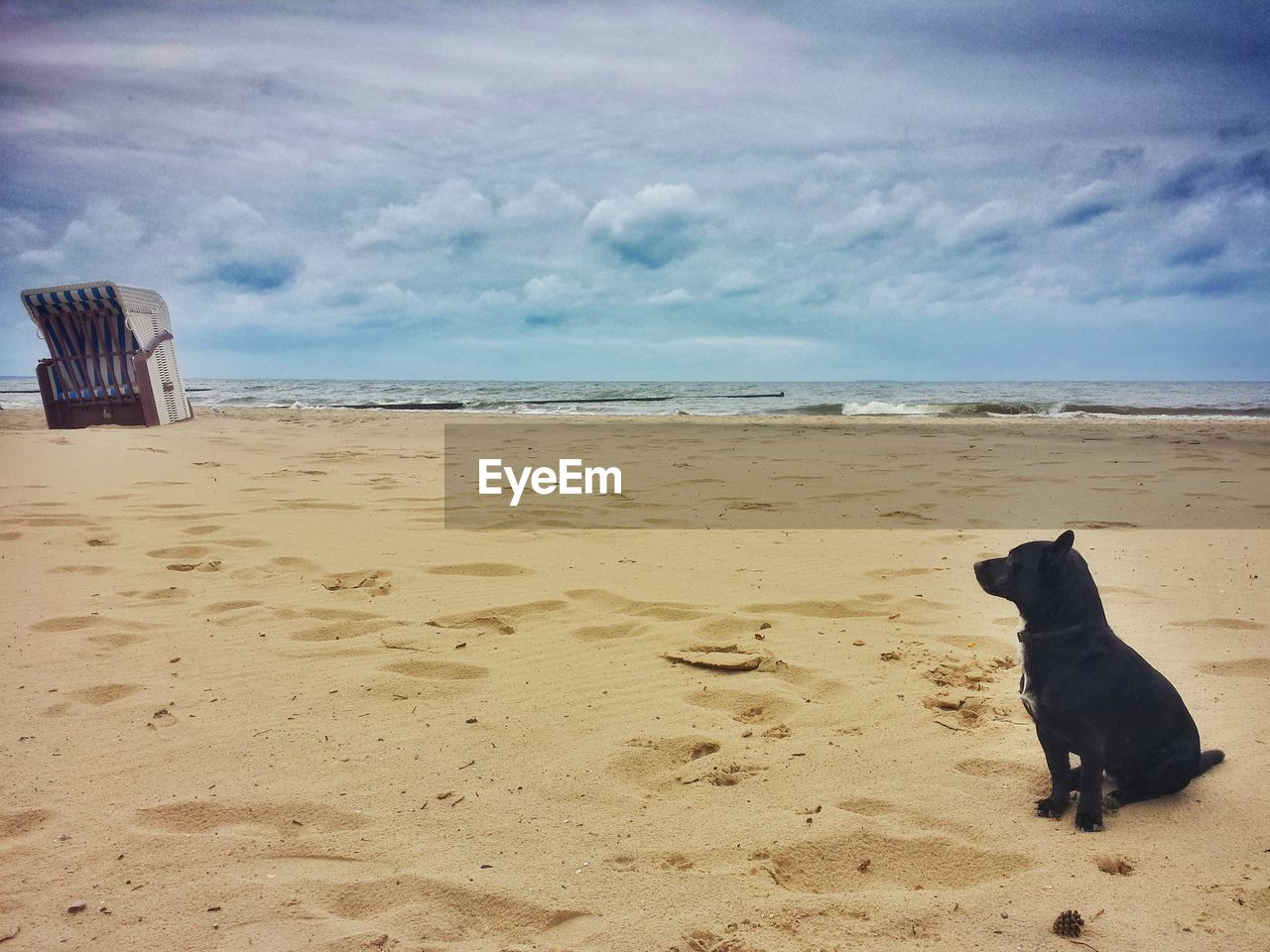 beach, sea, sand, dog, nature, pets, animal themes, sky, horizon over water, domestic animals, water, one animal, no people, cloud - sky, outdoors, day, scenics, mammal, beauty in nature