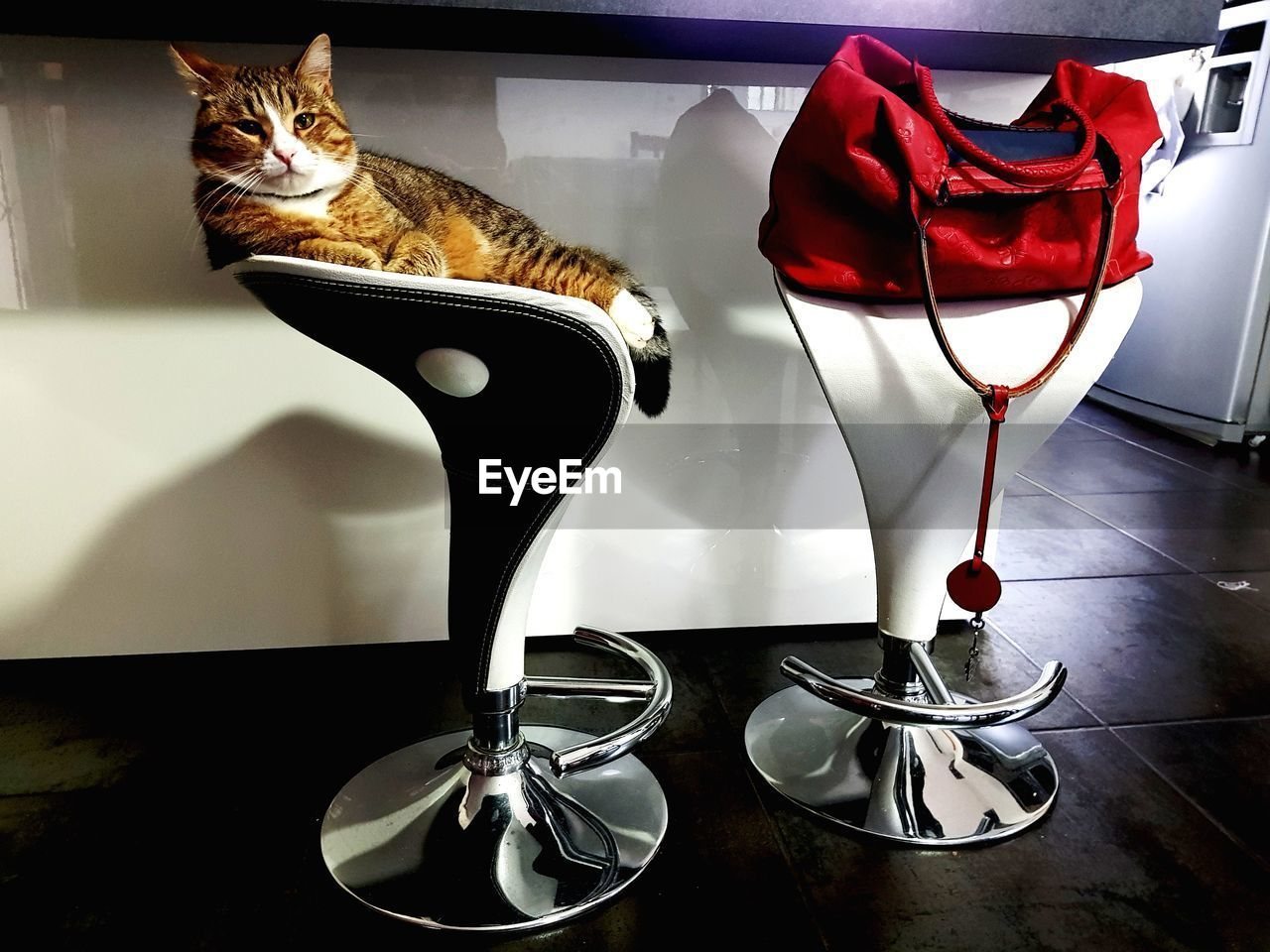 cat, feline, domestic cat, domestic animals, mammal, domestic, pets, animal themes, animal, table, indoors, no people, vertebrate, one animal, household equipment, nature, glass - material, flooring, close-up, home interior, whisker
