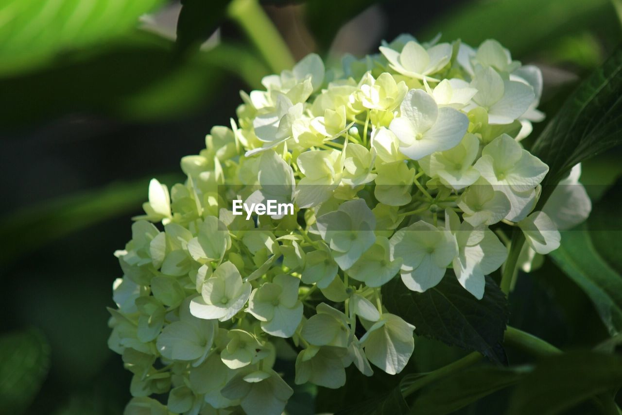 flower, beauty in nature, nature, growth, fragility, petal, freshness, outdoors, plant, day, blooming, close-up, flower head, no people