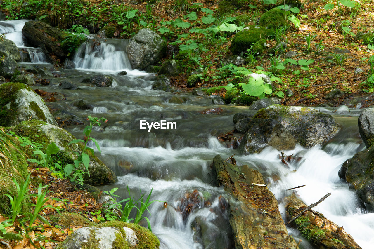 water, rock, flowing water, motion, long exposure, solid, rock - object, beauty in nature, blurred motion, forest, plant, nature, waterfall, scenics - nature, no people, flowing, downloading, tree, land, outdoors, stream - flowing water, rainforest, power in nature, running water
