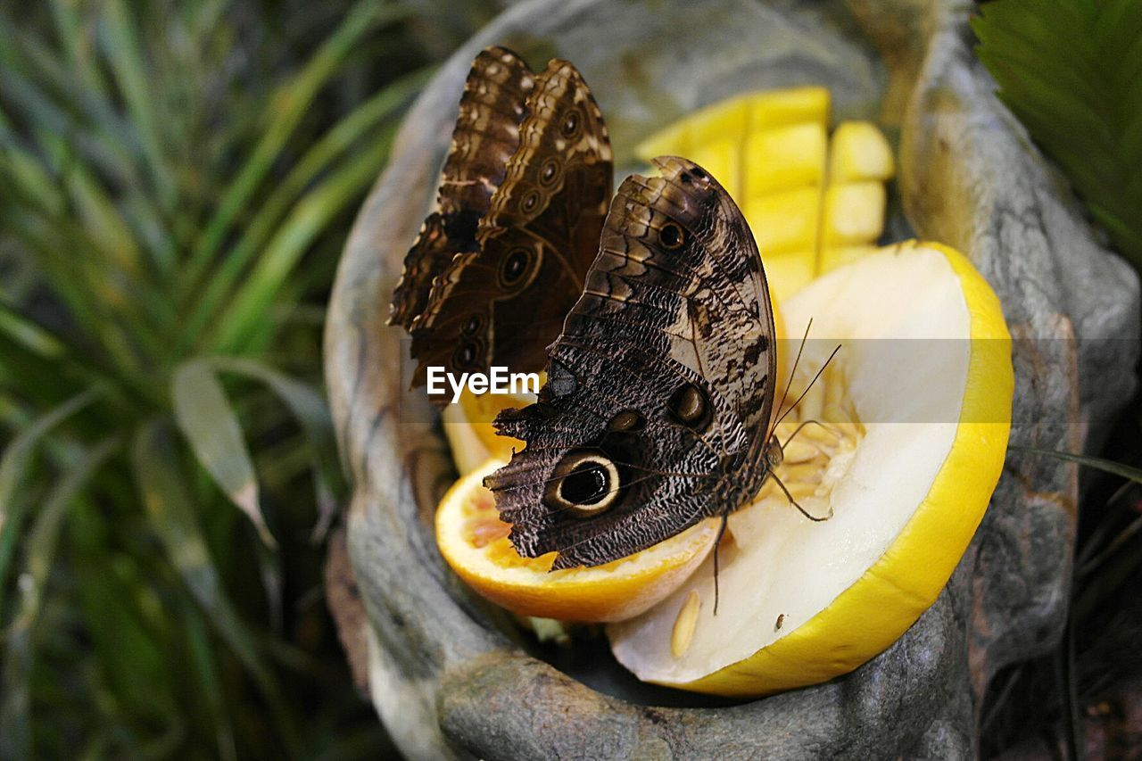 Close-Up Of Butterfly On Fruit Slice