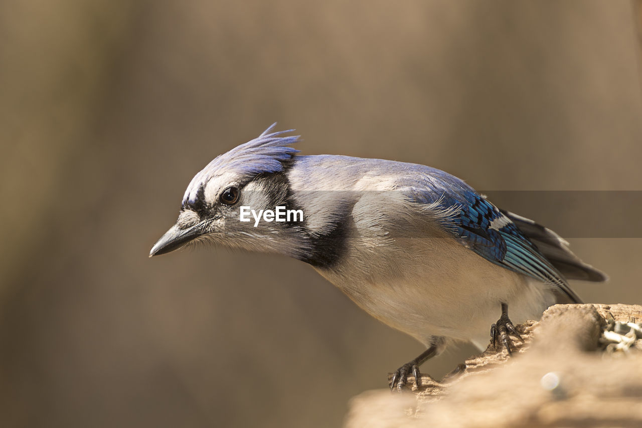 one animal, bird, vertebrate, animal themes, animal, animal wildlife, animals in the wild, close-up, selective focus, no people, focus on foreground, day, nature, side view, outdoors, looking away, perching, looking, beauty in nature, beak, animal eye