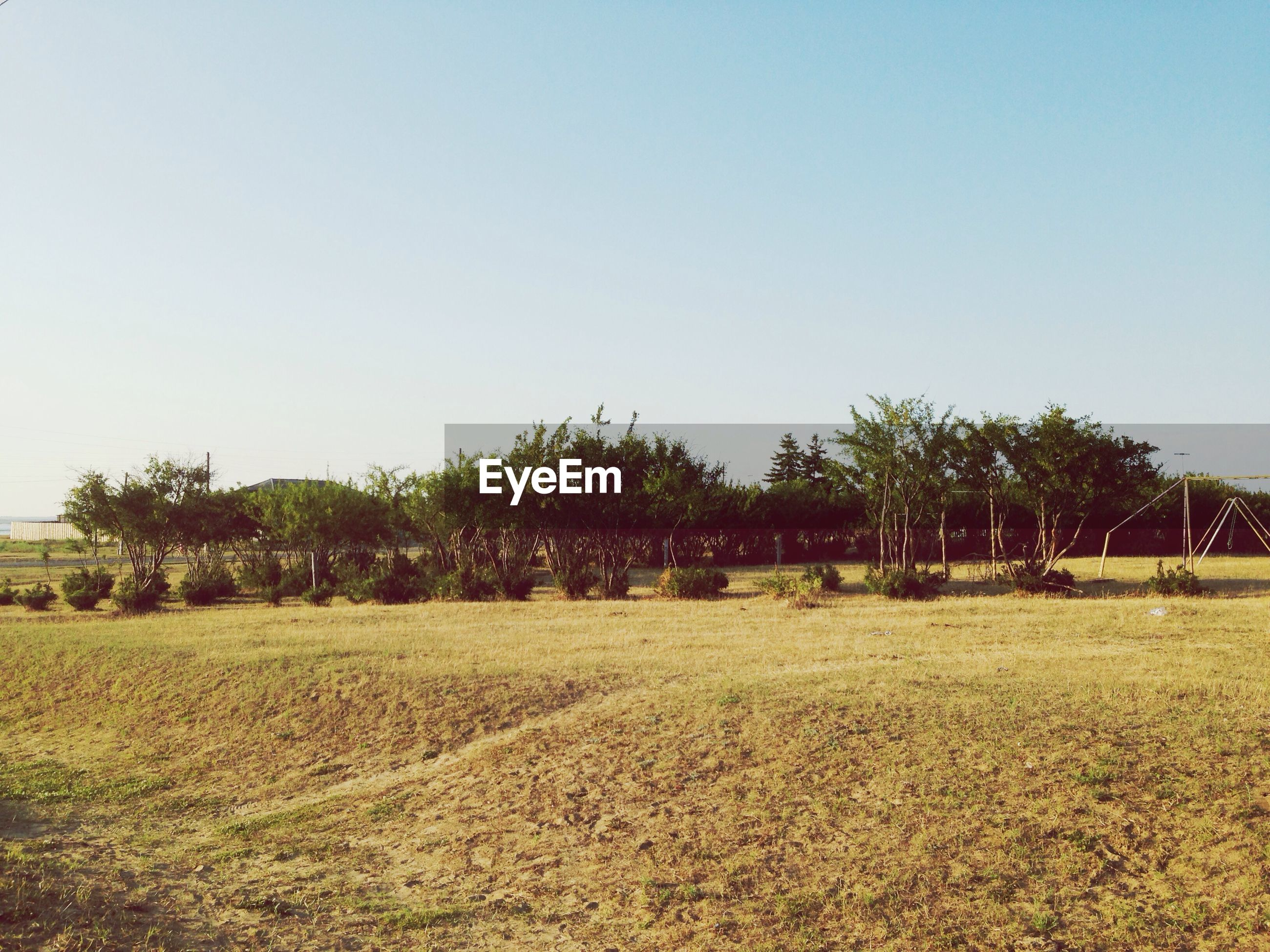 clear sky, copy space, tree, grass, field, tranquil scene, tranquility, landscape, growth, nature, beauty in nature, scenics, rural scene, green color, grassy, outdoors, agriculture, sky, blue, day