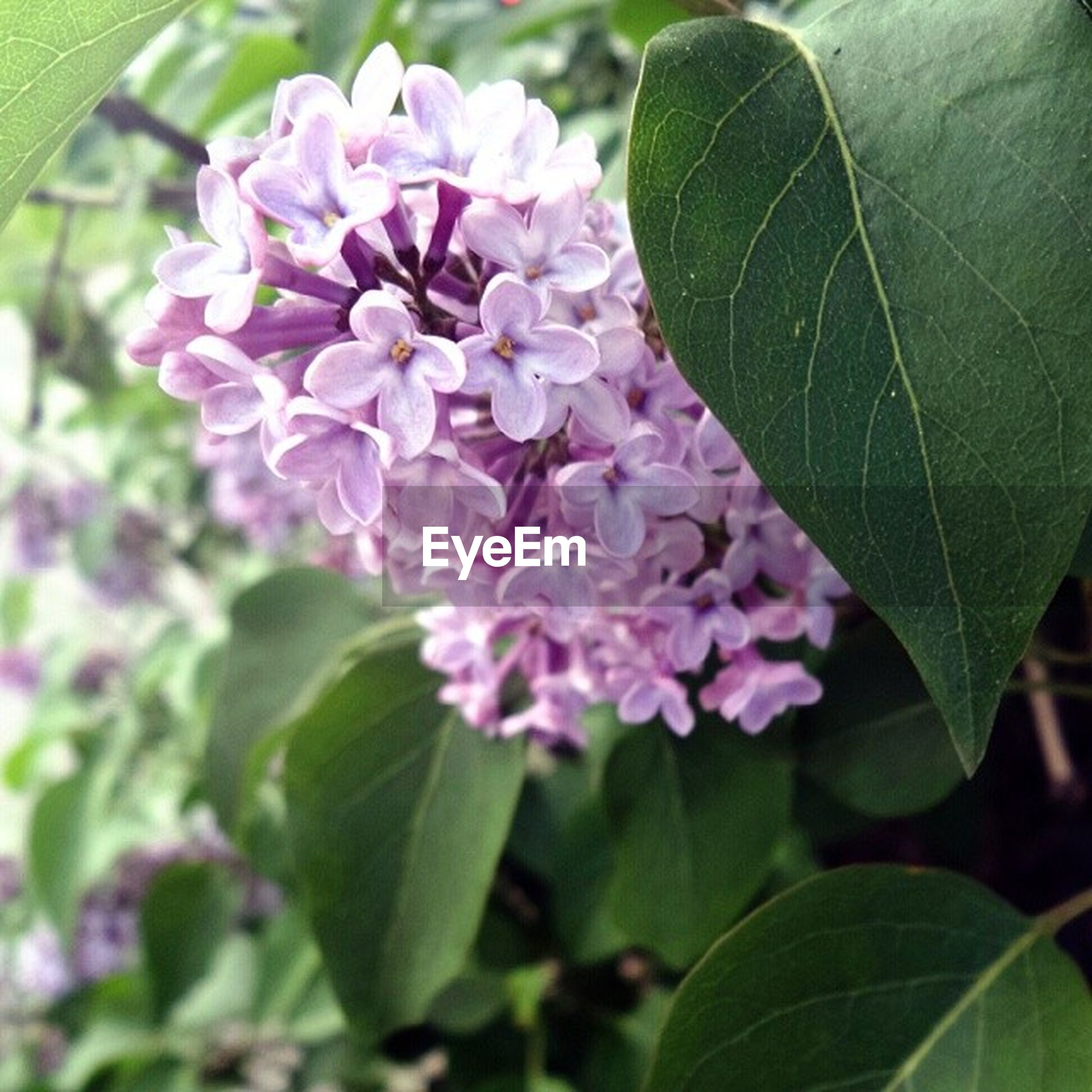 flower, freshness, growth, leaf, fragility, petal, beauty in nature, flower head, close-up, plant, nature, blooming, focus on foreground, green color, pink color, in bloom, blossom, high angle view, purple, outdoors
