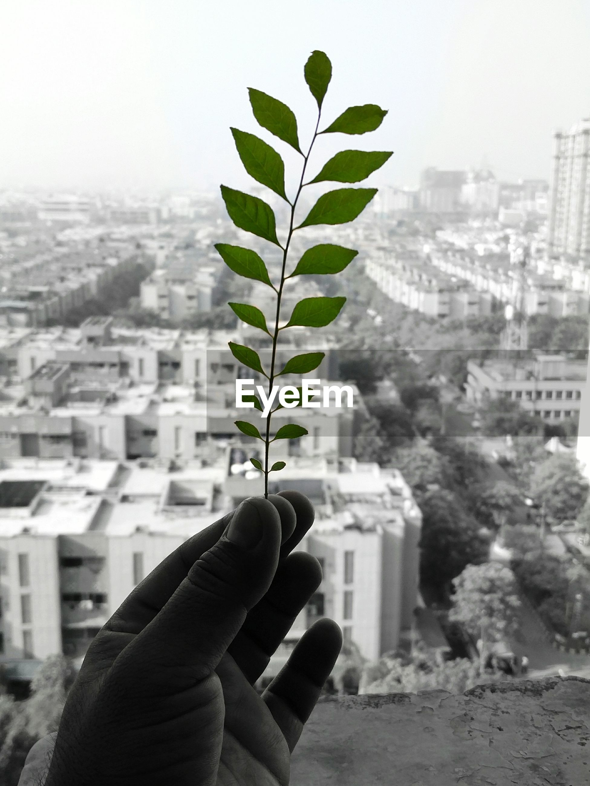 CLOSE-UP OF HAND HOLDING PLANT AGAINST CITY