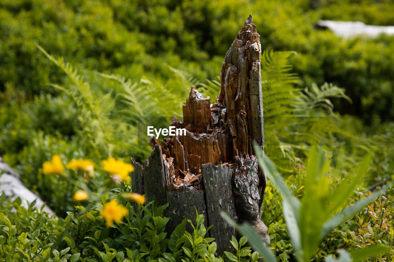 plant, wood - material, nature, field, no people, land, day, growth, green color, tree, close-up, grass, focus on foreground, selective focus, outdoors, beauty in nature, sunlight, wood, metal, tranquility, bark