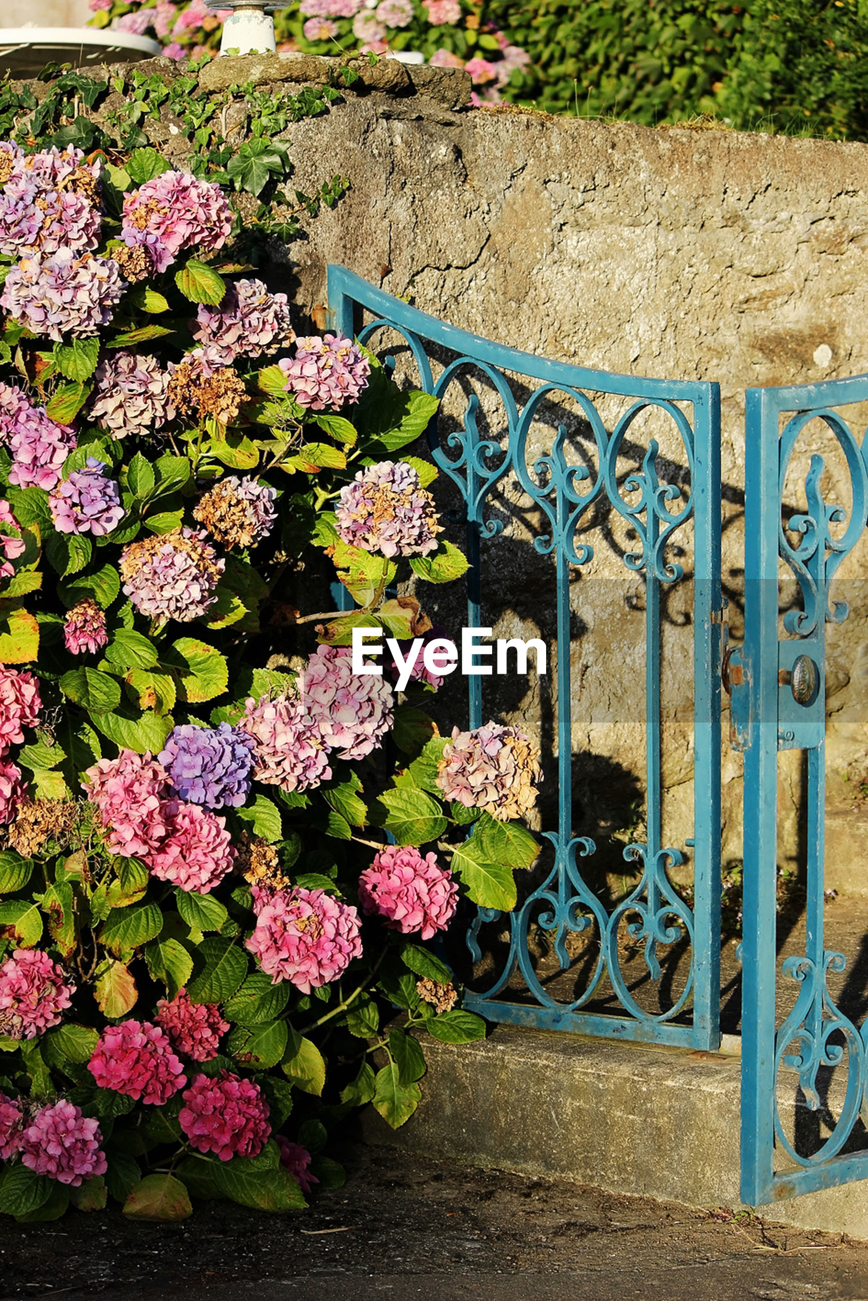 flower, gate, plant, outdoors, growth, no people, day, nature