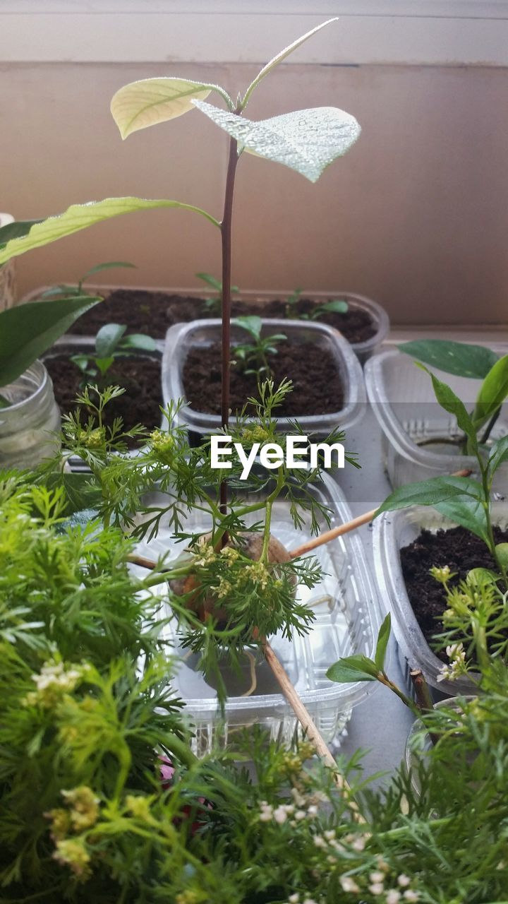 growth, plant, potted plant, leaf, no people, green color, nature, high angle view, day, freshness, indoors, greenhouse, beauty in nature, close-up, plant nursery