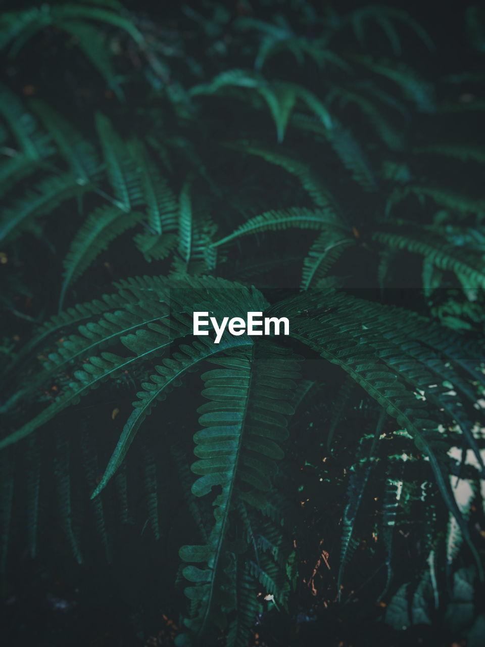 Full Frame Shot Of Ferns