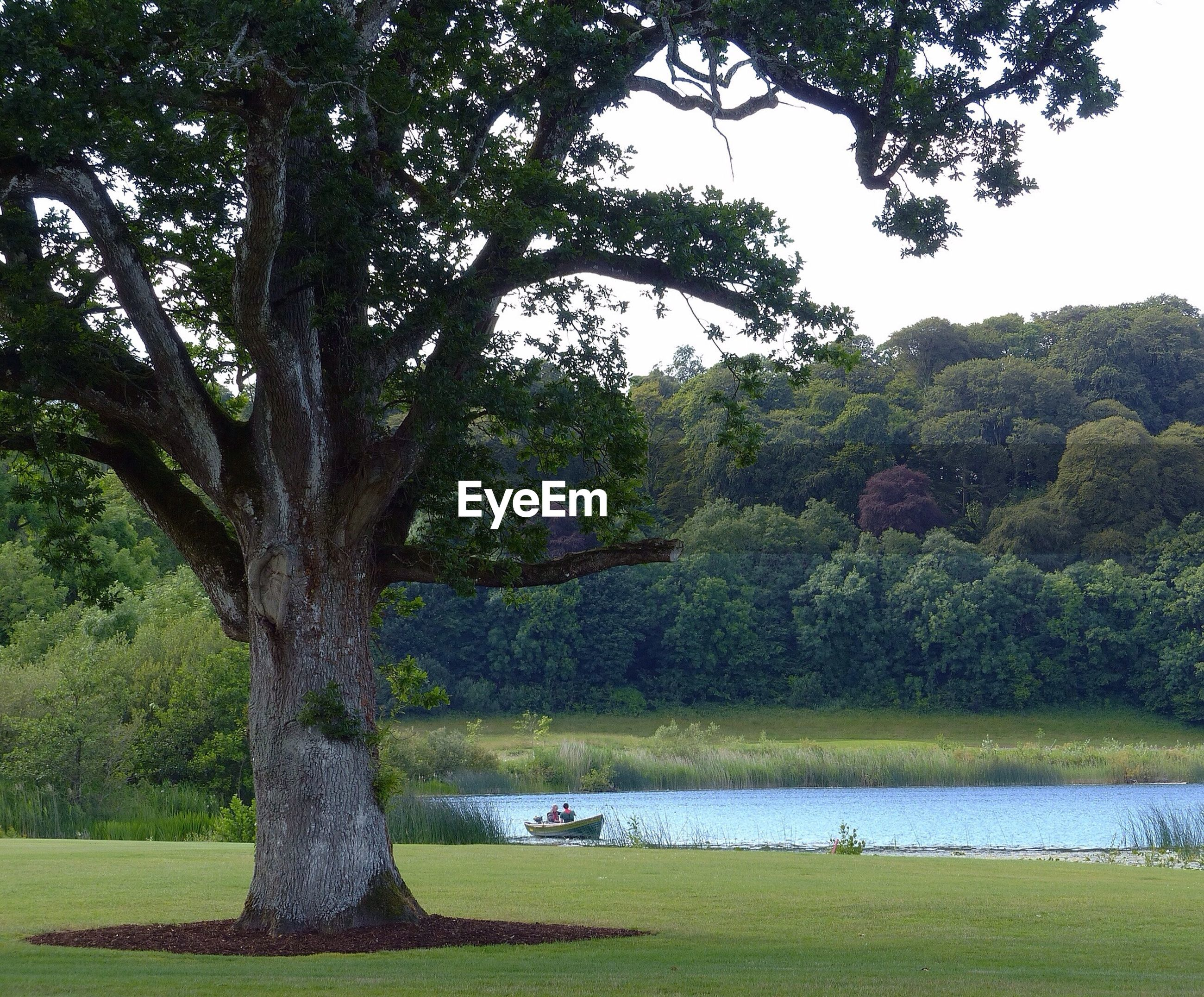 tree, tranquil scene, tranquility, water, beauty in nature, scenics, growth, grass, green color, lake, nature, park - man made space, sky, branch, idyllic, tree trunk, landscape, river, park, lakeshore