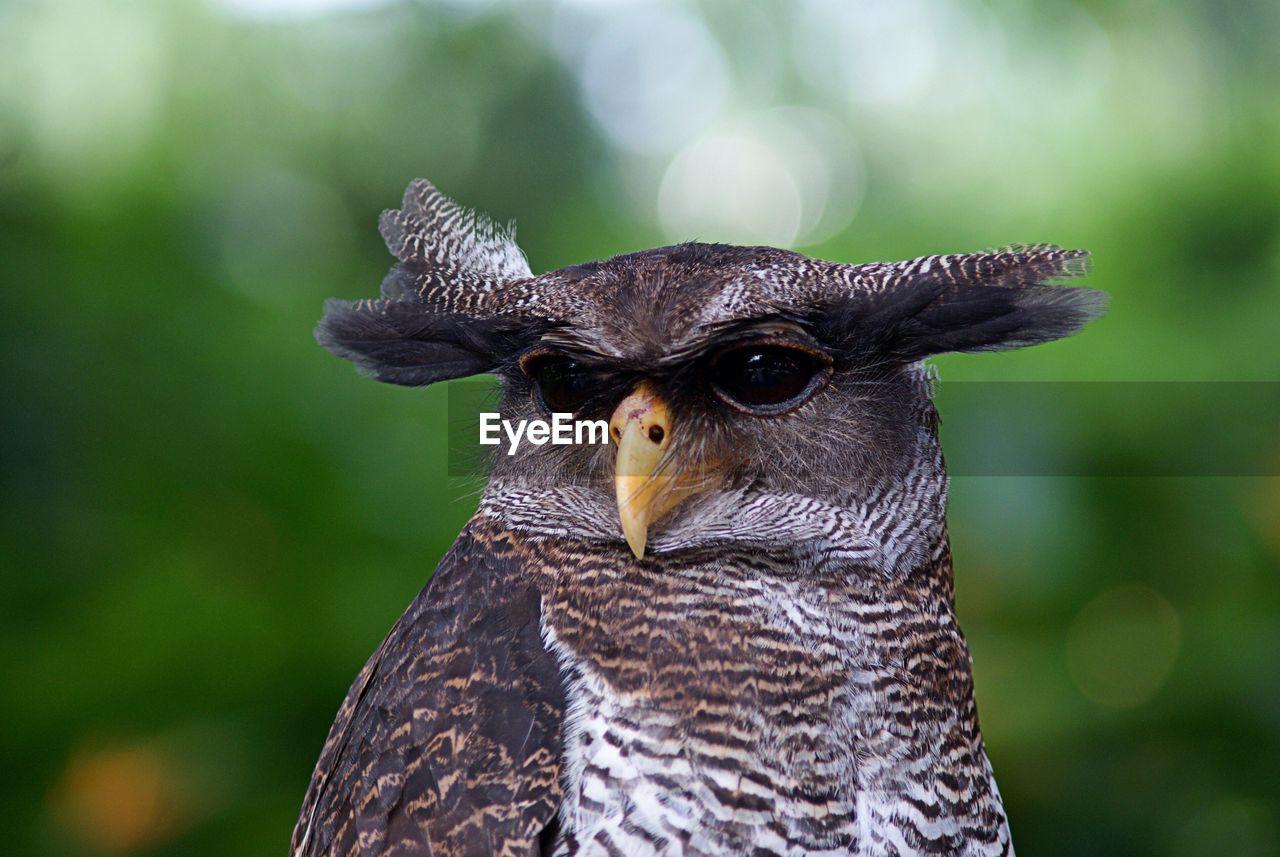 Close-up of owl looking away
