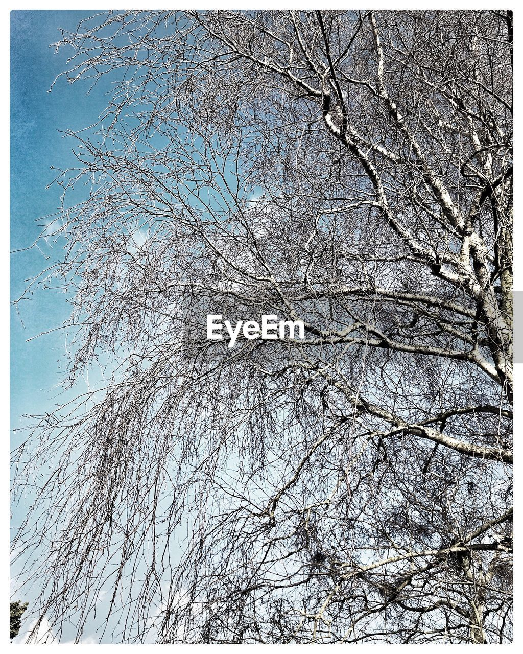 tree, bare tree, branch, low angle view, nature, beauty in nature, no people, day, outdoors, winter, tranquility, snow, sky, clear sky, fragility, flower, freshness