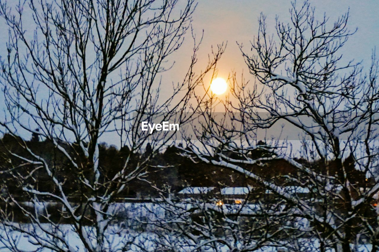 winter, snow, cold temperature, bare tree, nature, beauty in nature, sun, scenics, weather, tree, outdoors, tranquility, branch, sky, tranquil scene, no people, sunset, landscape, day