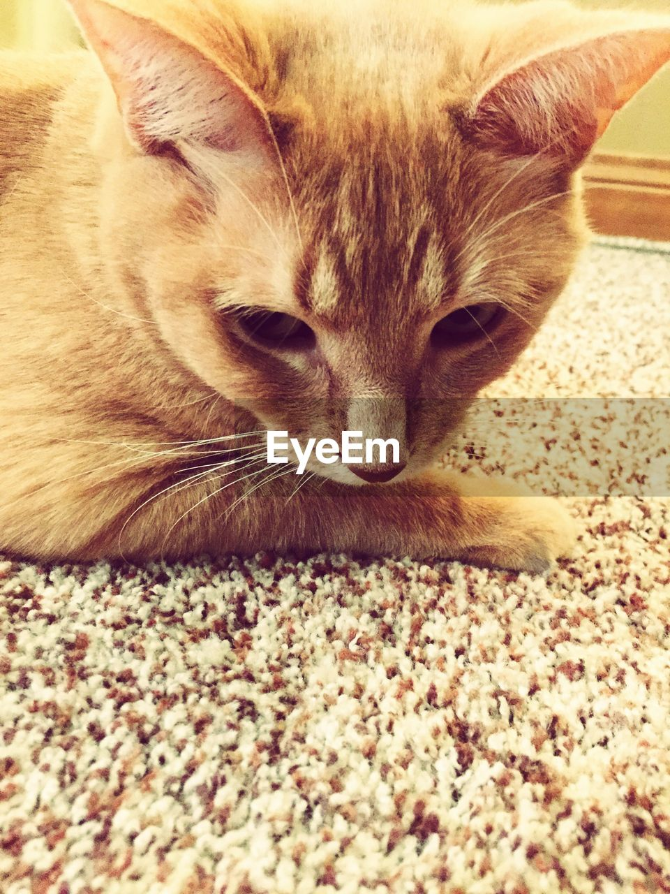 Close-up of cat sitting on rug at home
