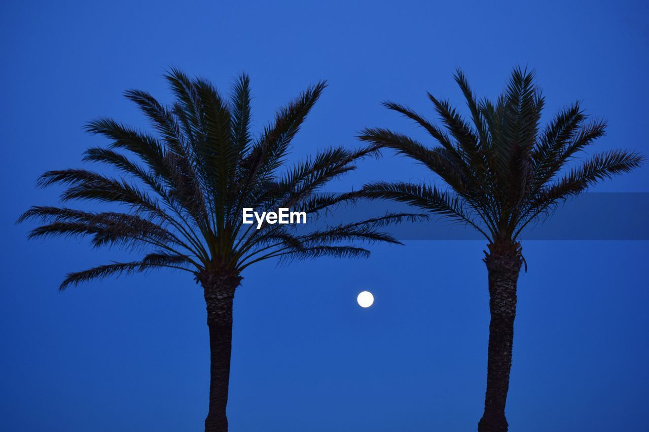 sky, tree, moon, palm tree, tropical climate, plant, clear sky, nature, blue, low angle view, beauty in nature, growth, full moon, no people, night, scenics - nature, silhouette, tranquility, outdoors, astronomy, planetary moon, moonlight, palm leaf