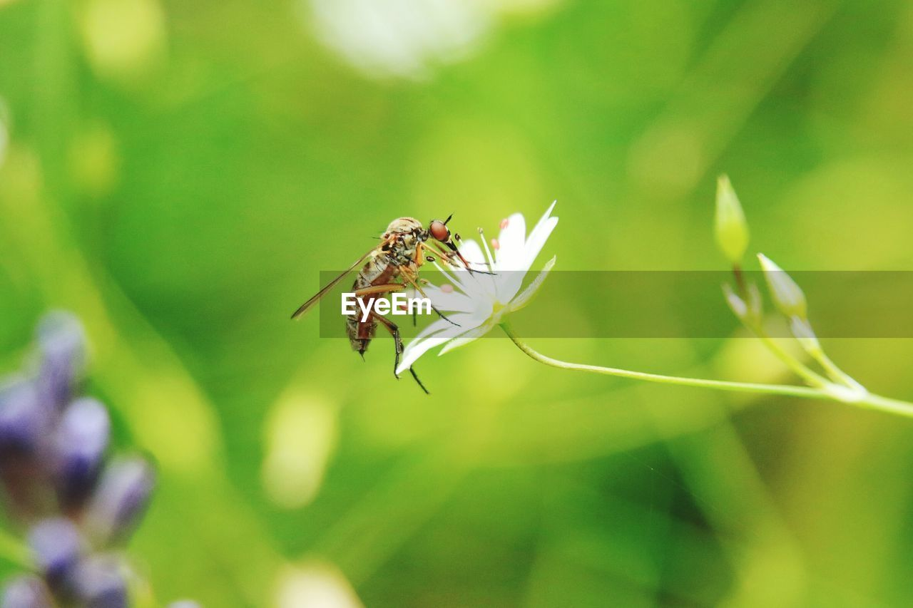 insect, animal themes, animals in the wild, one animal, nature, close-up, outdoors, no people, day, plant, growth, fragility, beauty in nature, freshness