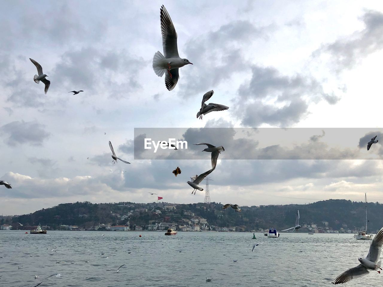 flying, vertebrate, animal wildlife, animal themes, animal, animals in the wild, bird, cloud - sky, sky, group of animals, water, spread wings, large group of animals, mid-air, nature, sea, waterfront, beauty in nature, motion, no people, seagull, flock of birds
