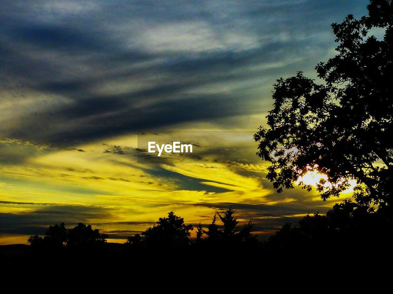 silhouette, tree, sunset, nature, sky, beauty in nature, tranquility, cloud - sky, tranquil scene, scenics, no people, growth, yellow, low angle view, outdoors, day