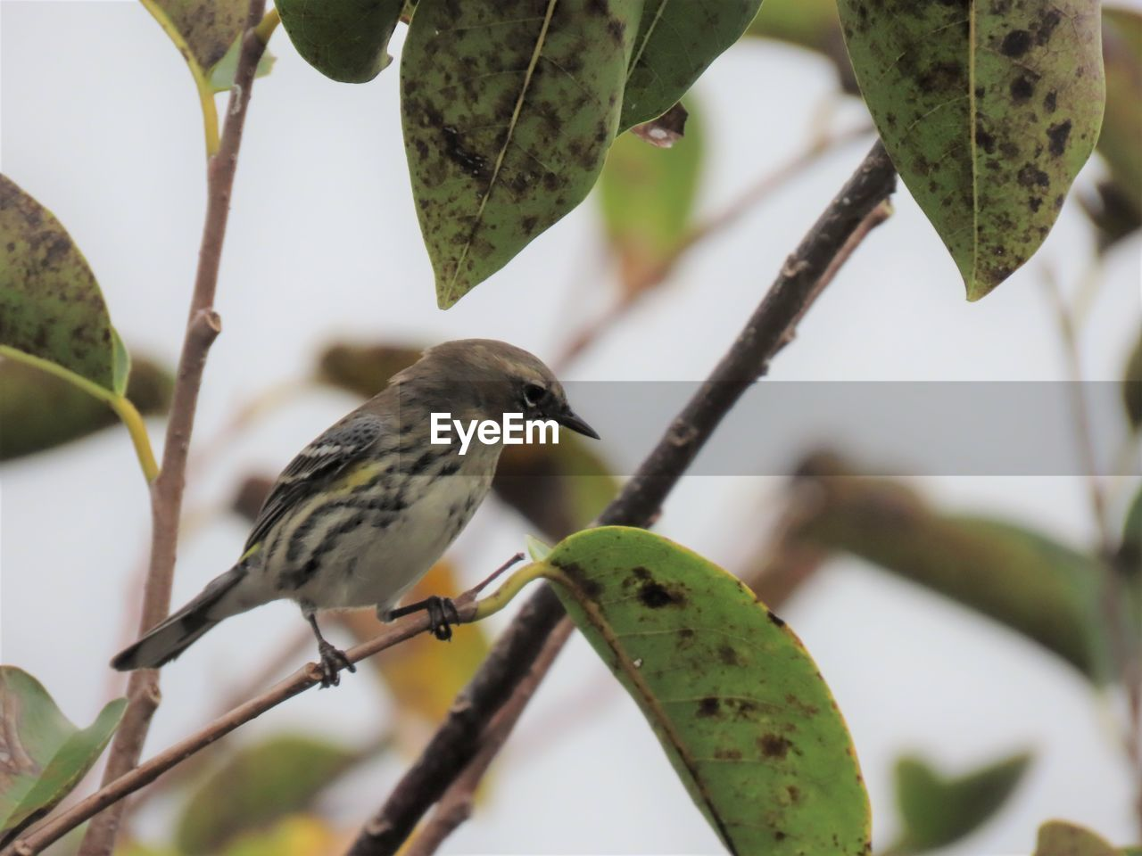 animal themes, vertebrate, bird, animal wildlife, animal, animals in the wild, plant, perching, branch, plant part, tree, leaf, one animal, no people, focus on foreground, nature, close-up, day, green color, growth, outdoors