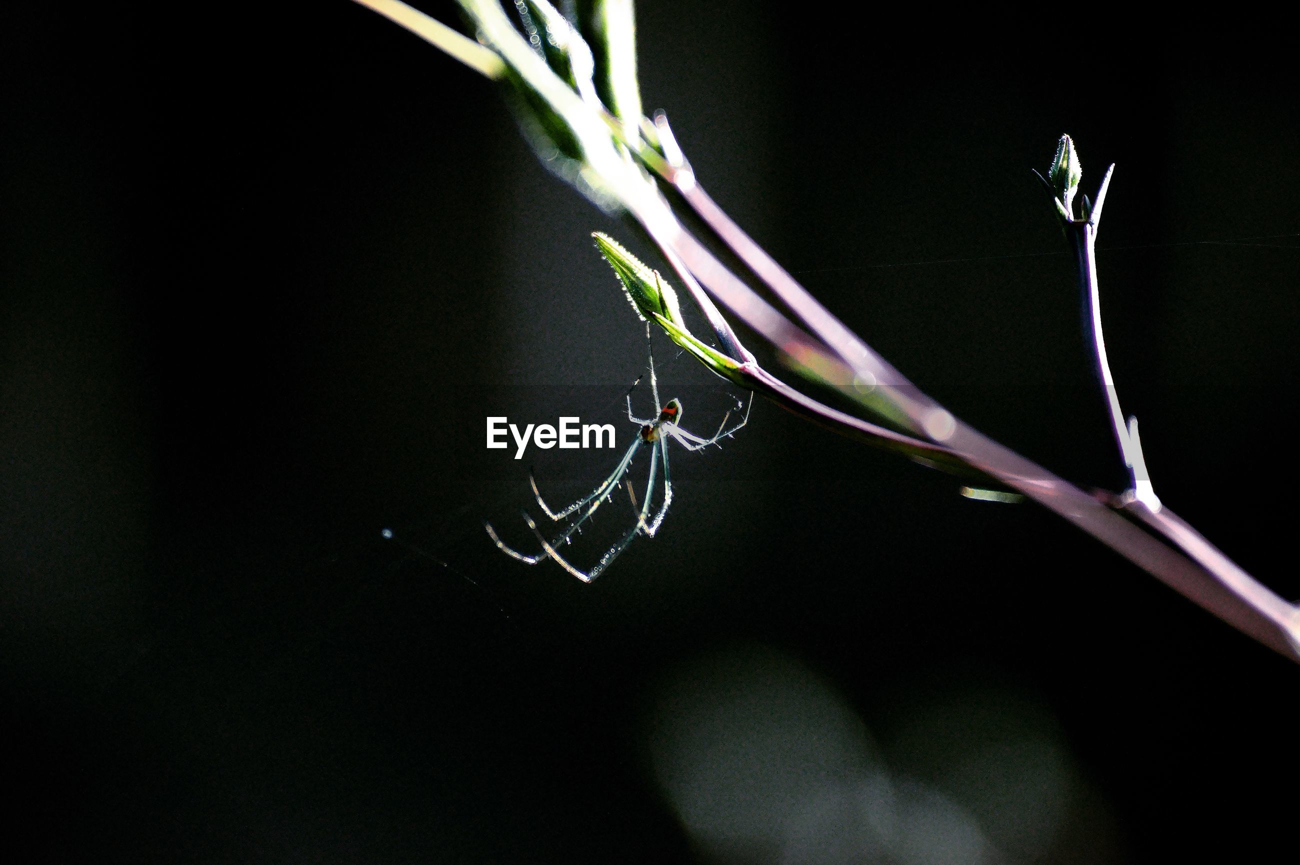 Close-up of spider on bud