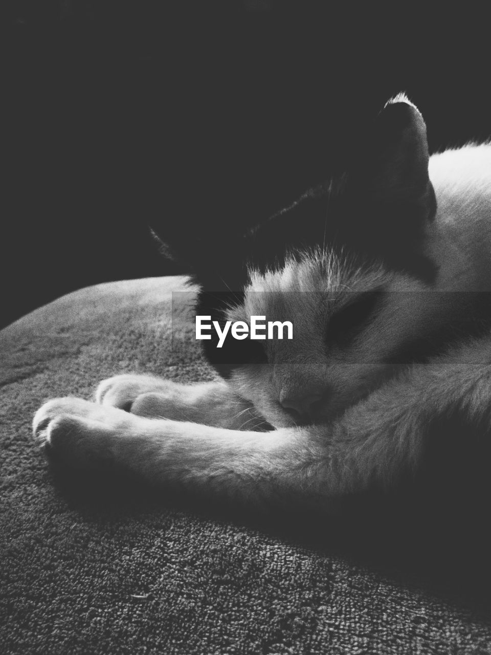 domestic cat, pets, feline, domestic animals, mammal, sleeping, cat, one animal, animal themes, indoors, relaxation, eyes closed, lying down, paw, no people, close-up, day