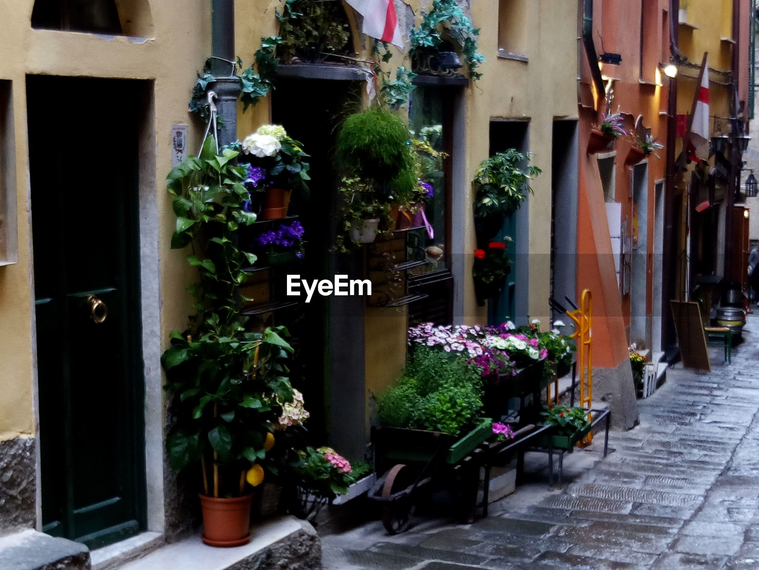 Potted plants arranged outside buildings